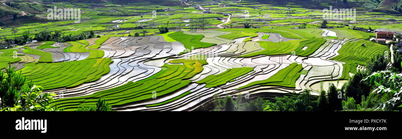 rice terraces MuCangChai - the wonders of the farmers - Stock Image