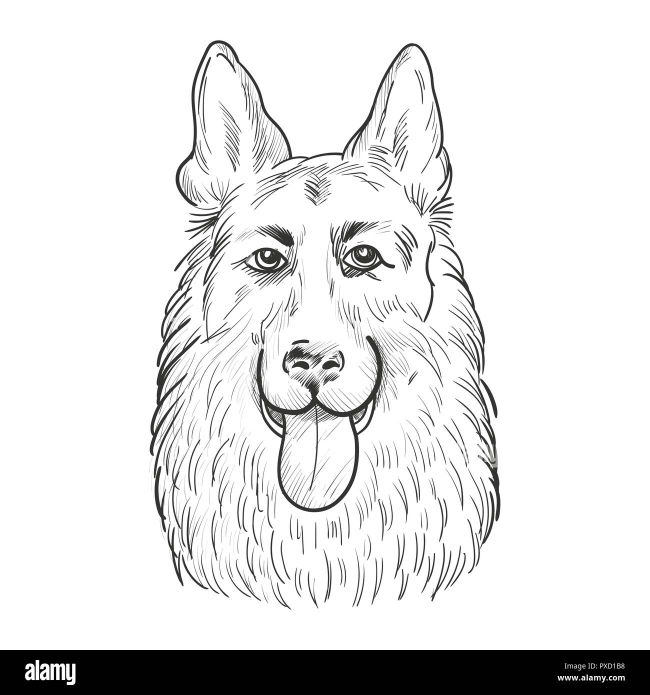German Shepherd dog face isolated on white background. Working dog head hand drawn sketch. - Stock Vector