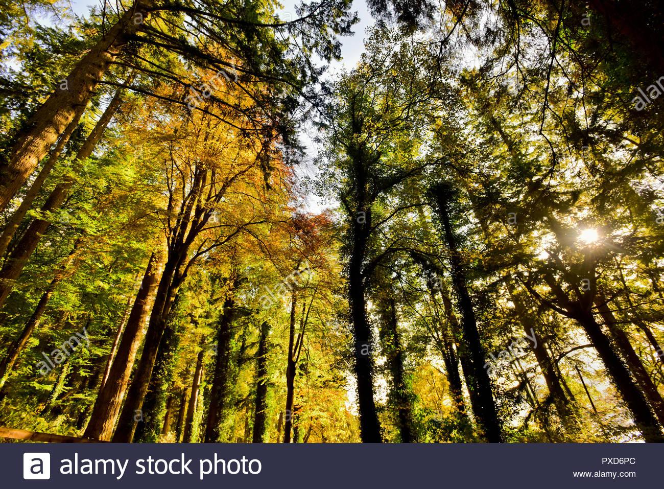 Autumn sun shining through trees at Lake Vyrnwyin Powys, Wales, UK - Stock Image