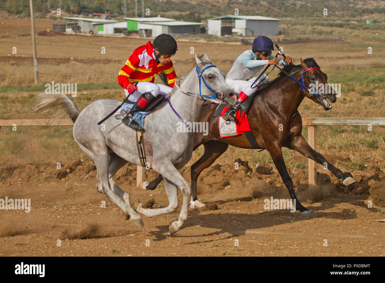 Arabian Horse In A Race With Bedouin Riders Stock Photo Alamy