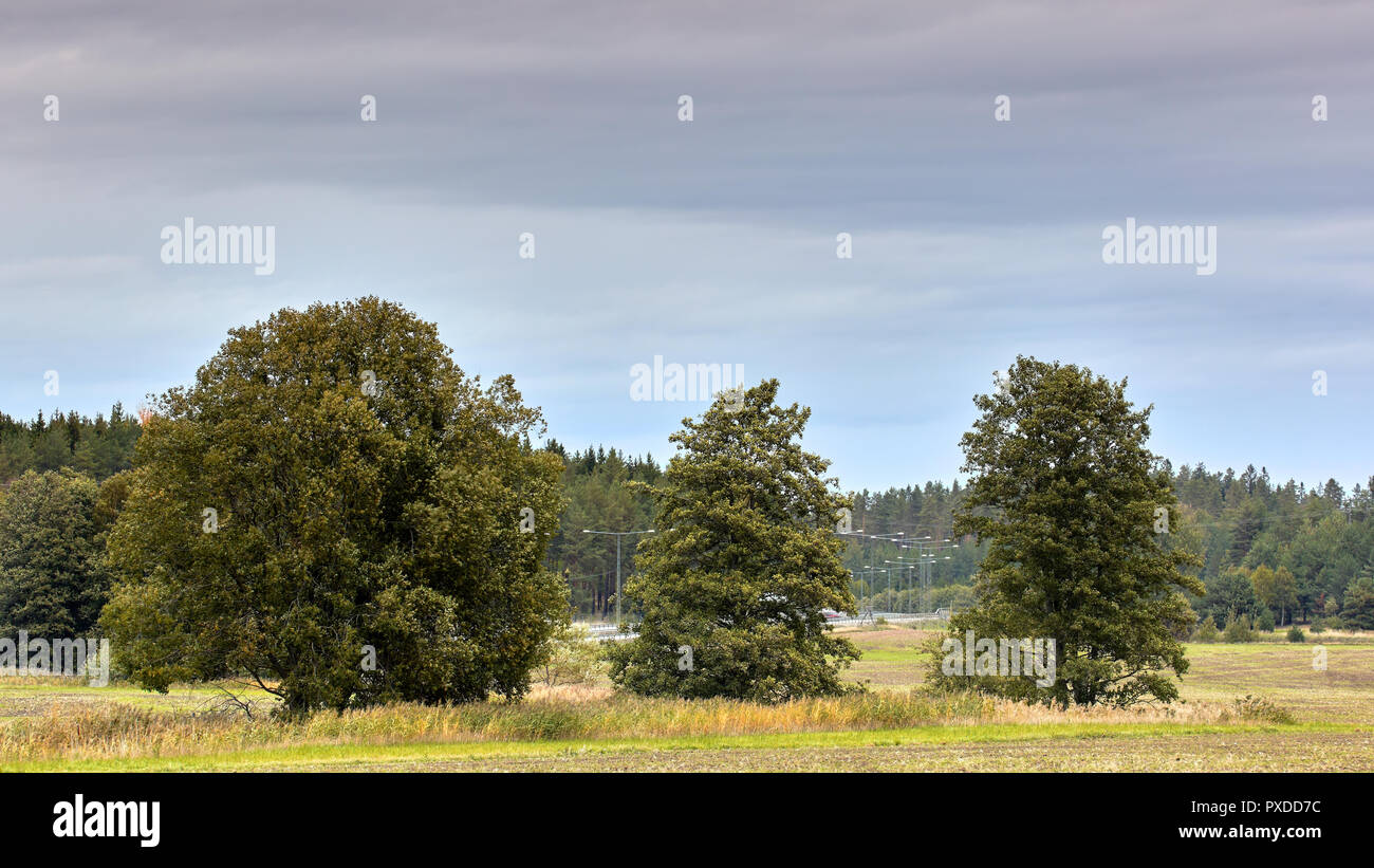 Trees Before Highway Stock Photos Trees Before Highway