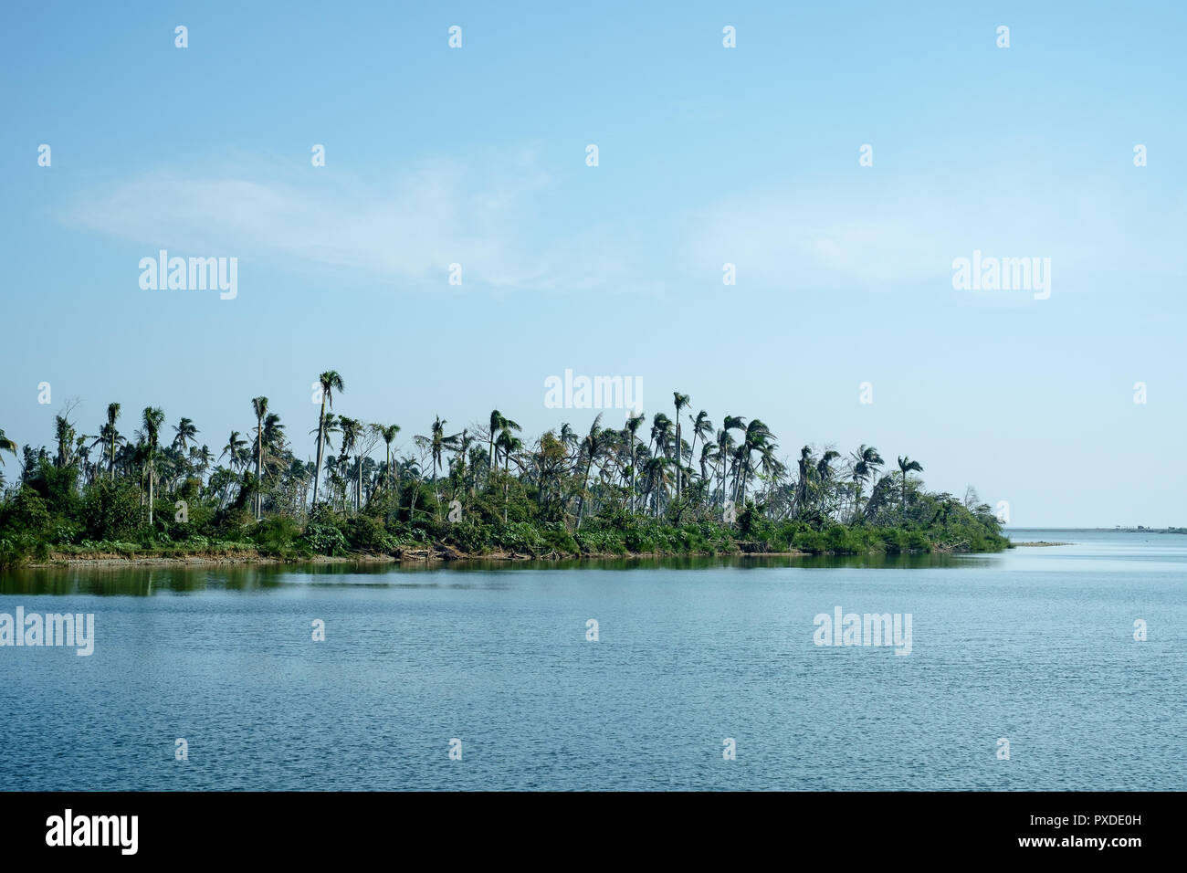 The River Bank of the River Toa - Stock Image