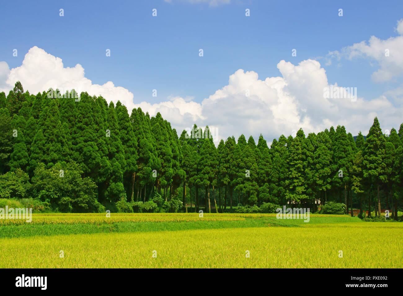 Summer Cumulonimbus and Field - Stock Image