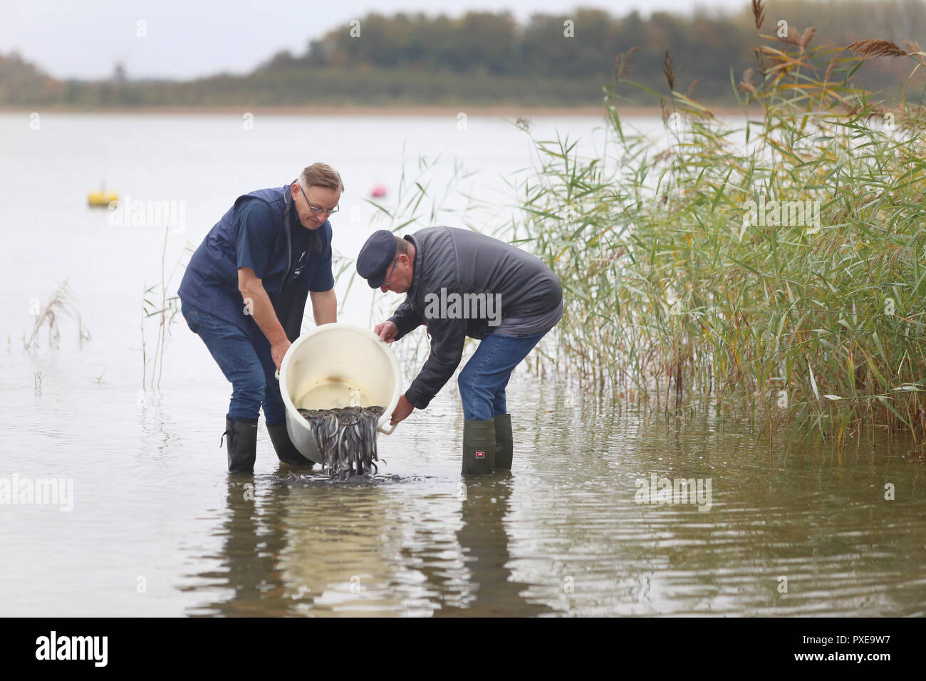 """22 October 2018, Mecklenburg-Western Pomerania, Goldberg: Klaus-Dieter Dehmel (l), fishermen from Dabel and Wolfgang Geibrasch, fishermen from Lohmen and managers of the Goldberger See expose pre-stretched (fed) young eels in the Goldberger See. For 25 years, the """"Landesanglerverband MV"""" has occupied eels worth around 100,000 euros annually. The campaign """"Save the European Eel"""" should contribute to the conservation of eels in Mecklenburg-Vorpommern. Photo: Danny Gohlke/dpa-Zentralbild/dpa Stock Photo"""