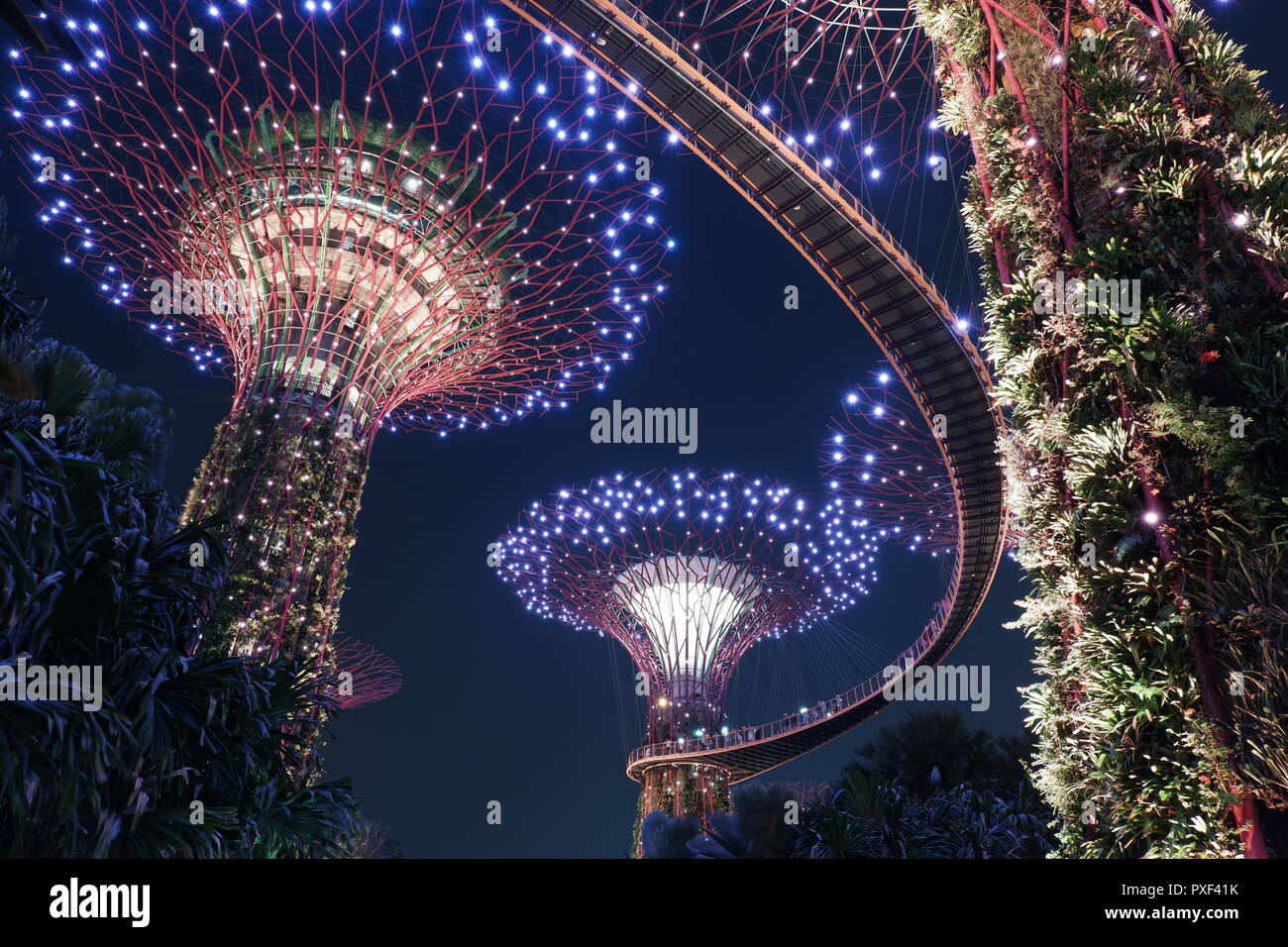 Supertree grove at Gardens By The Bay. These trees are vertical gardens measuring around 25 and 50 metres tall. Stock Photo