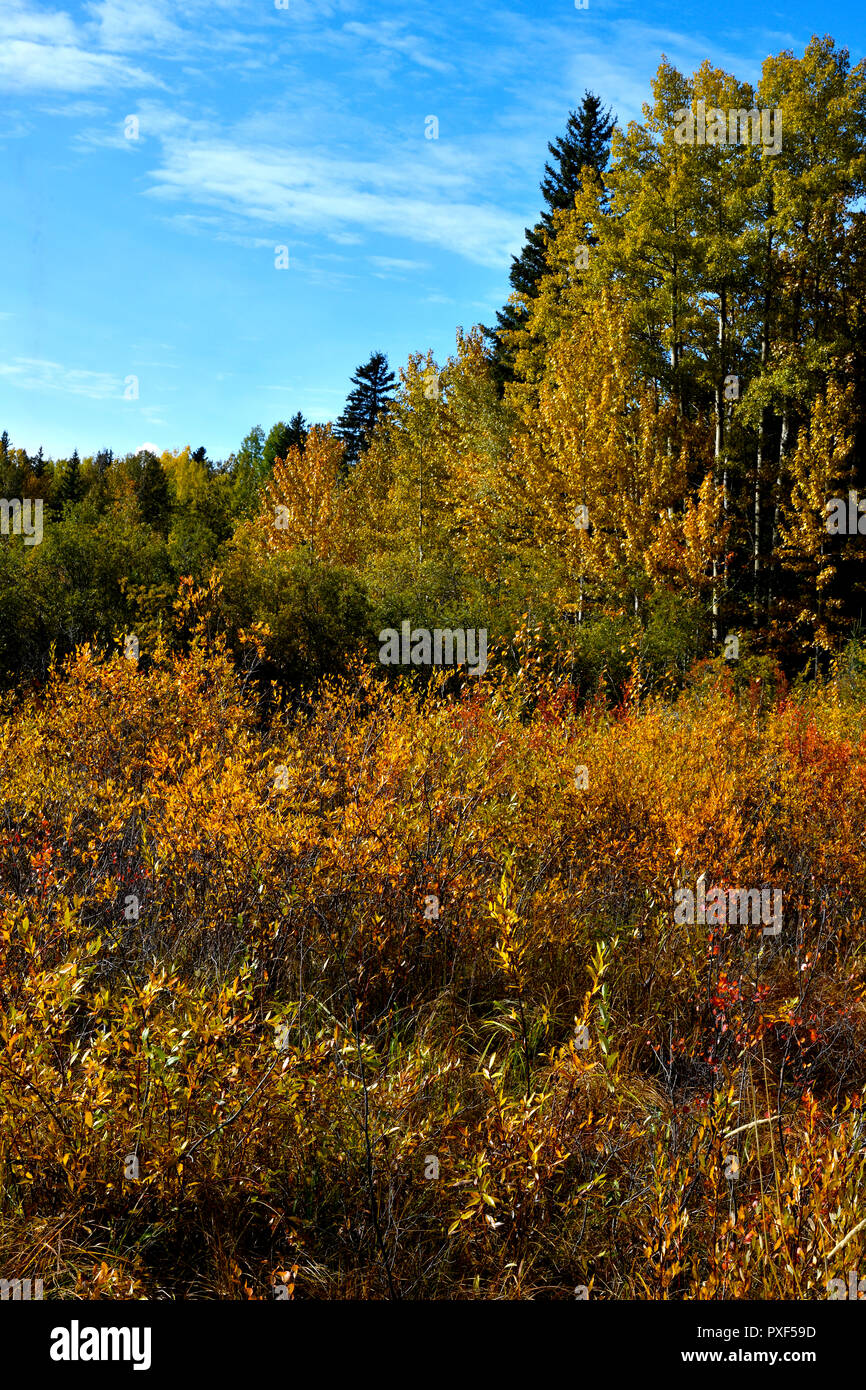 A vertical landscape of vegetation and trees changing color of the leaves as the arrival of fall in rural Alberta Canada. - Stock Image