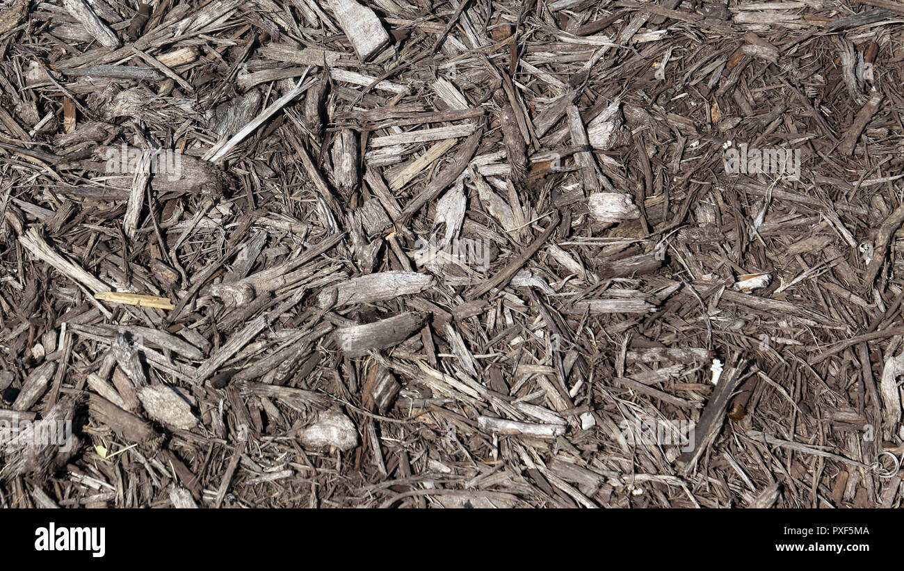 mulch texture background In shades of brown - Stock Image