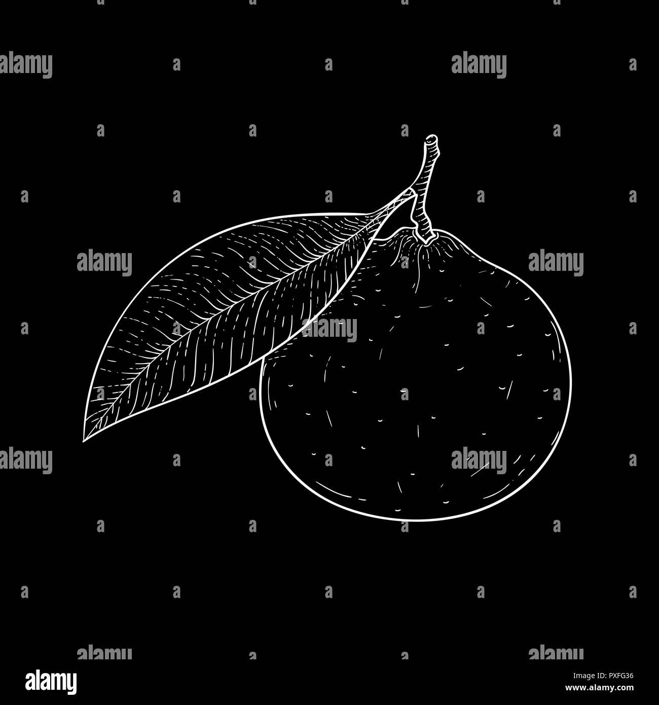 Tangerine. Hand drawn sketch, outline vector illustration on black background - Stock Image