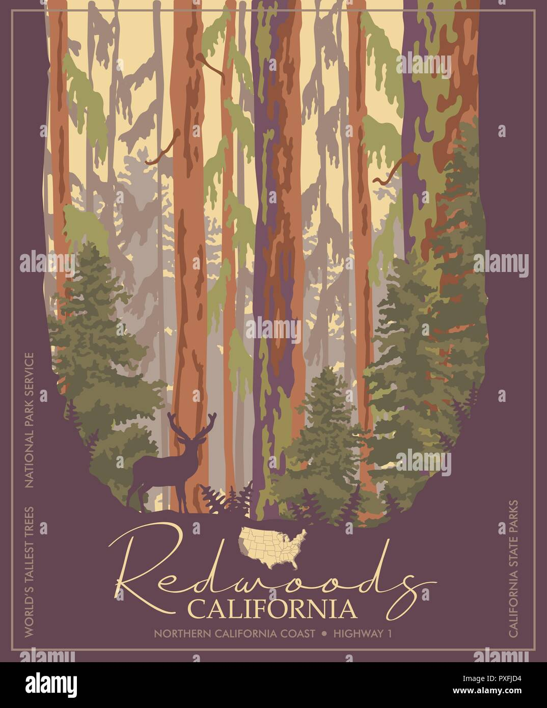 Redwoods park in California vector colorful poster. State parks. World's tallest trees. - Stock Vector