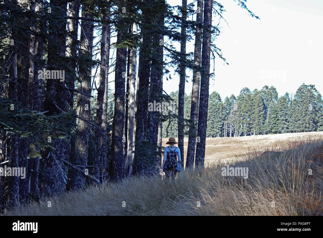 A lone hiker skirts the treeline along a high meadow trail. - Stock Image