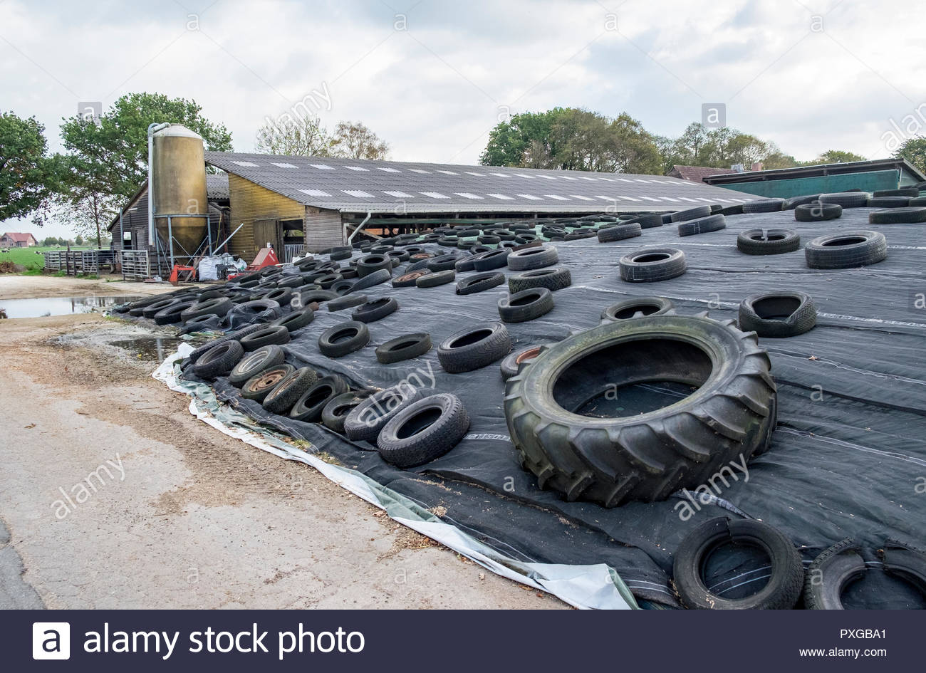 Fodder storage, silage, stored under tarpaulin weighted with old tires, northern Germany - Stock Image