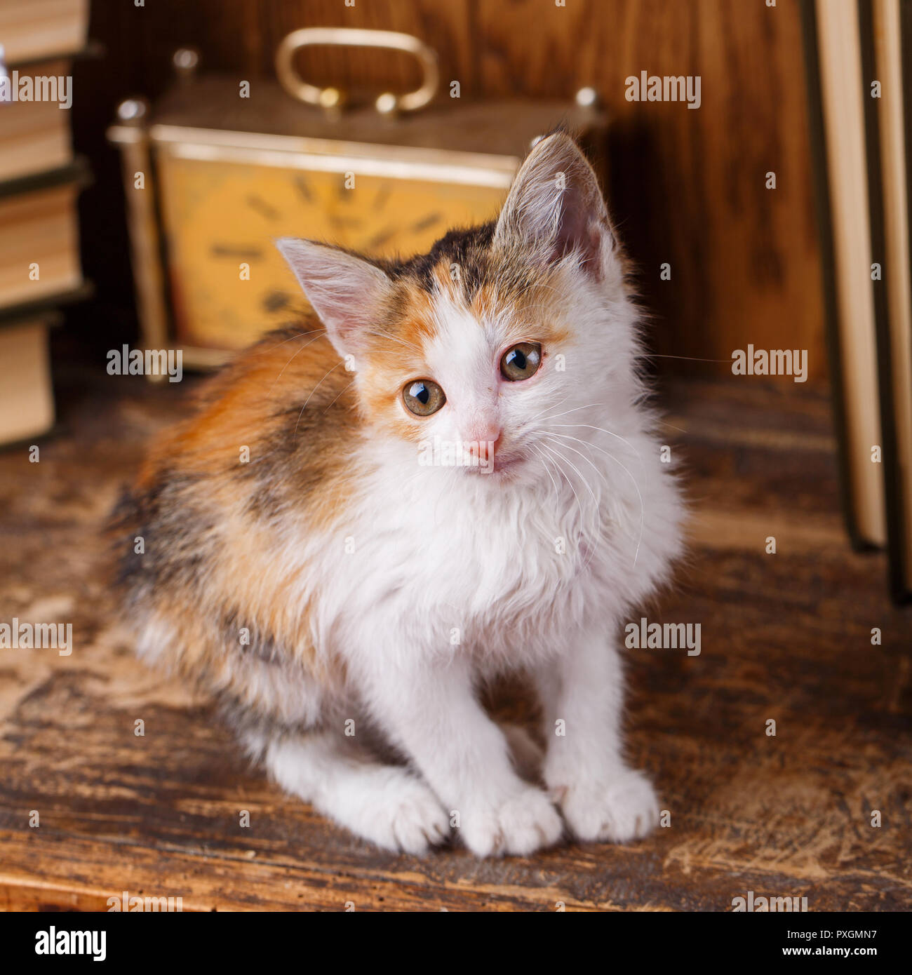 The cat on the bookshelf. Little playful kitten. - Stock Image