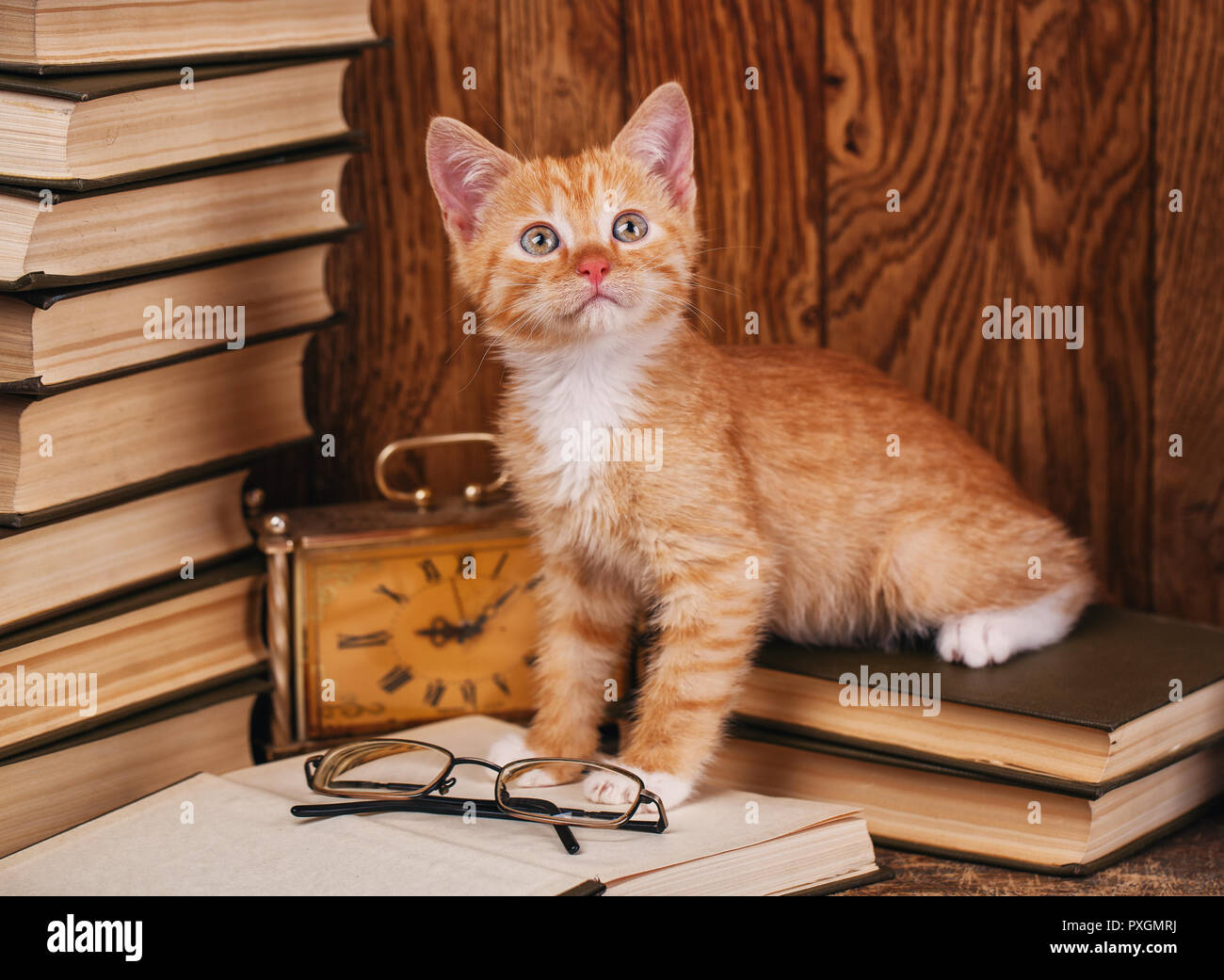 Kitty stands on books near the glasses - Stock Image