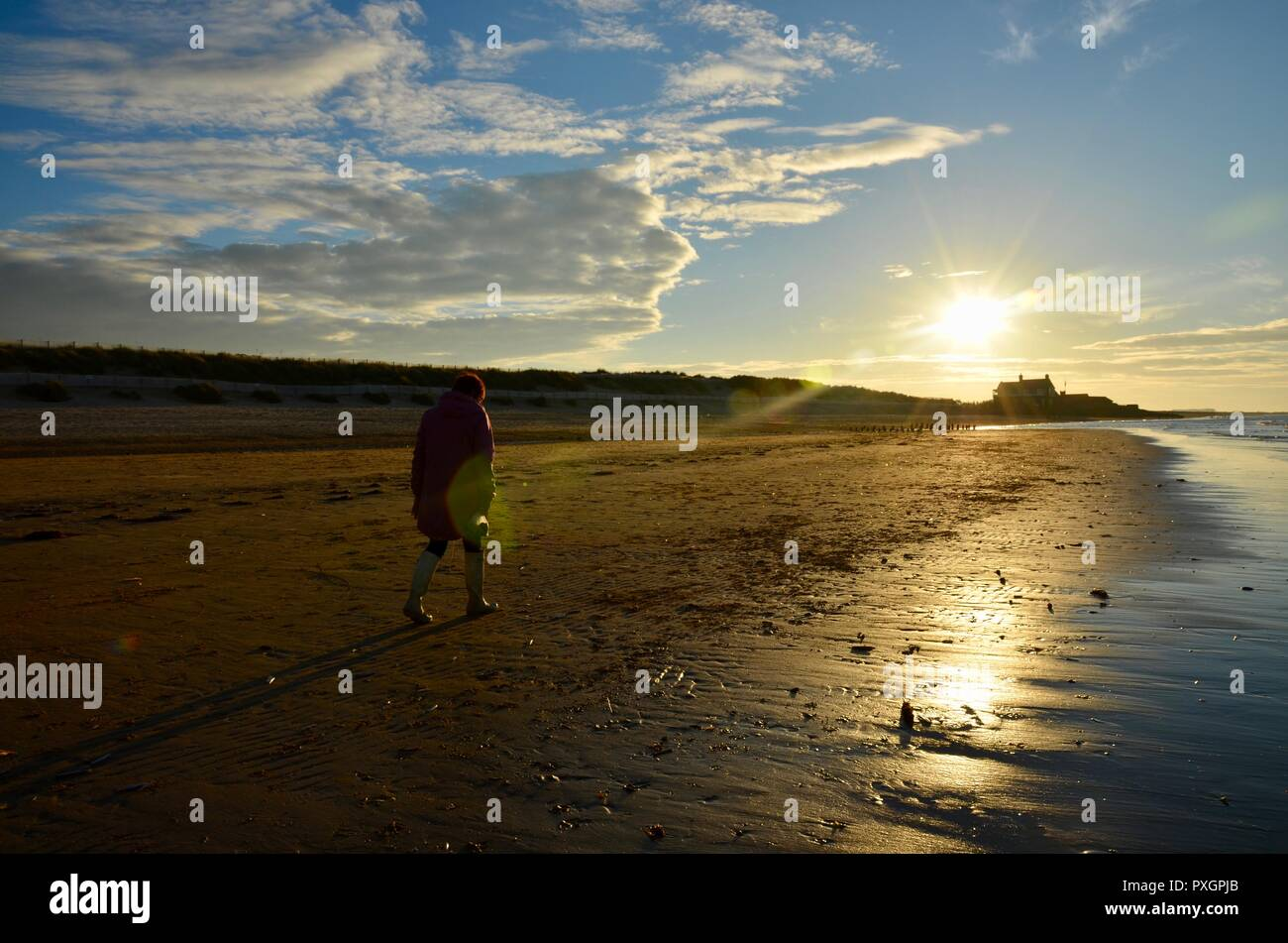 Woman walking alone on Brancaster beach at sunset on a bright autumn day, Norfolk, East Anglia, UK. - Stock Image
