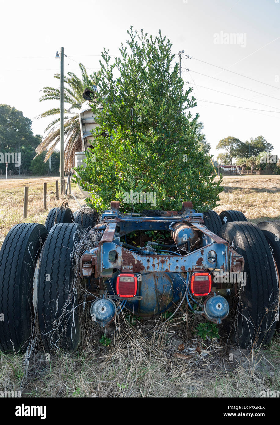 Abandoned 18 wheel truck with tree growing in the middle. - Stock Image