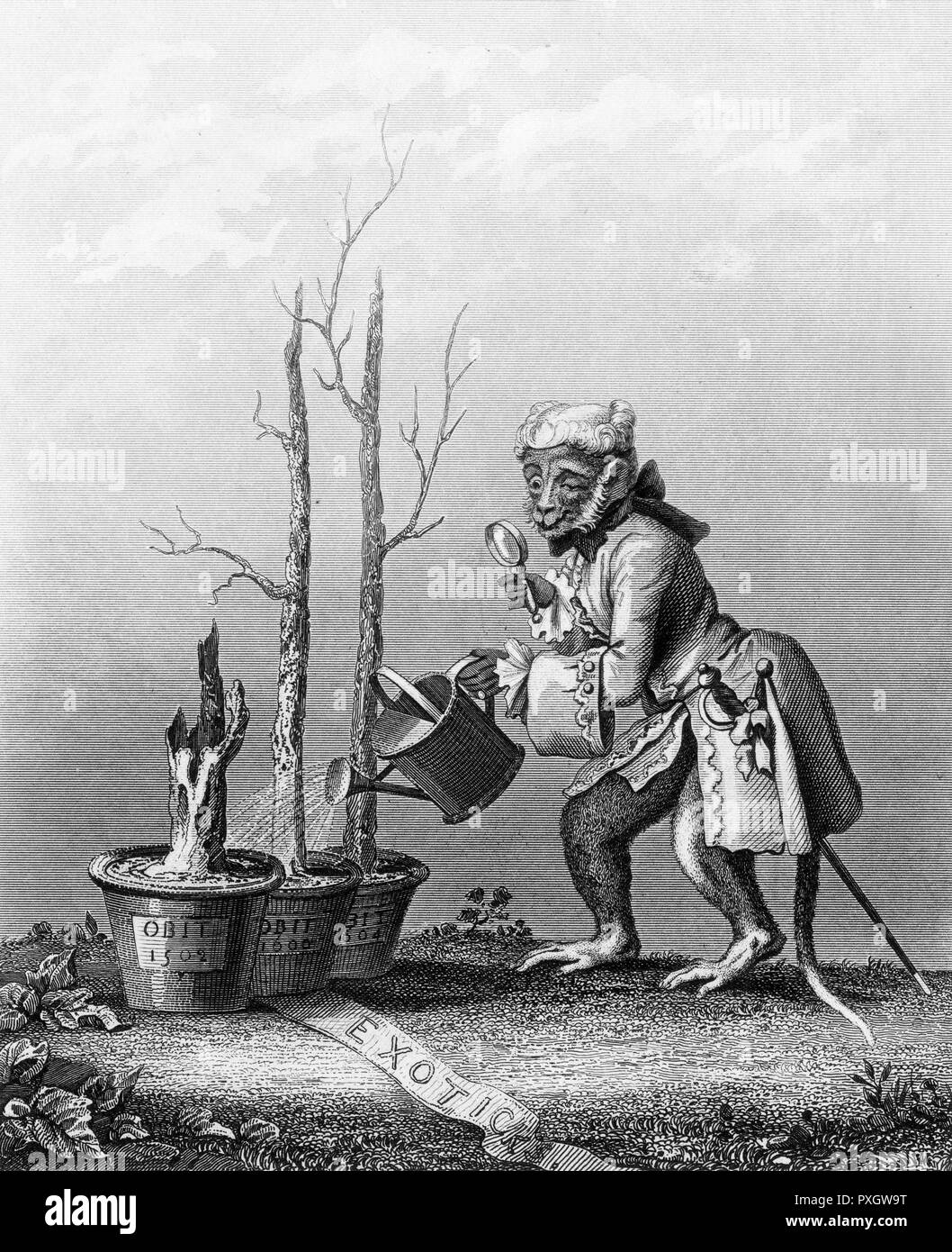 Whereas English artistic saplings thrive, foreign art ('exoticks'), watered by a monkey connoisseur, are stunted trunnks, dead beyond revival.     Date: 1764 - Stock Image