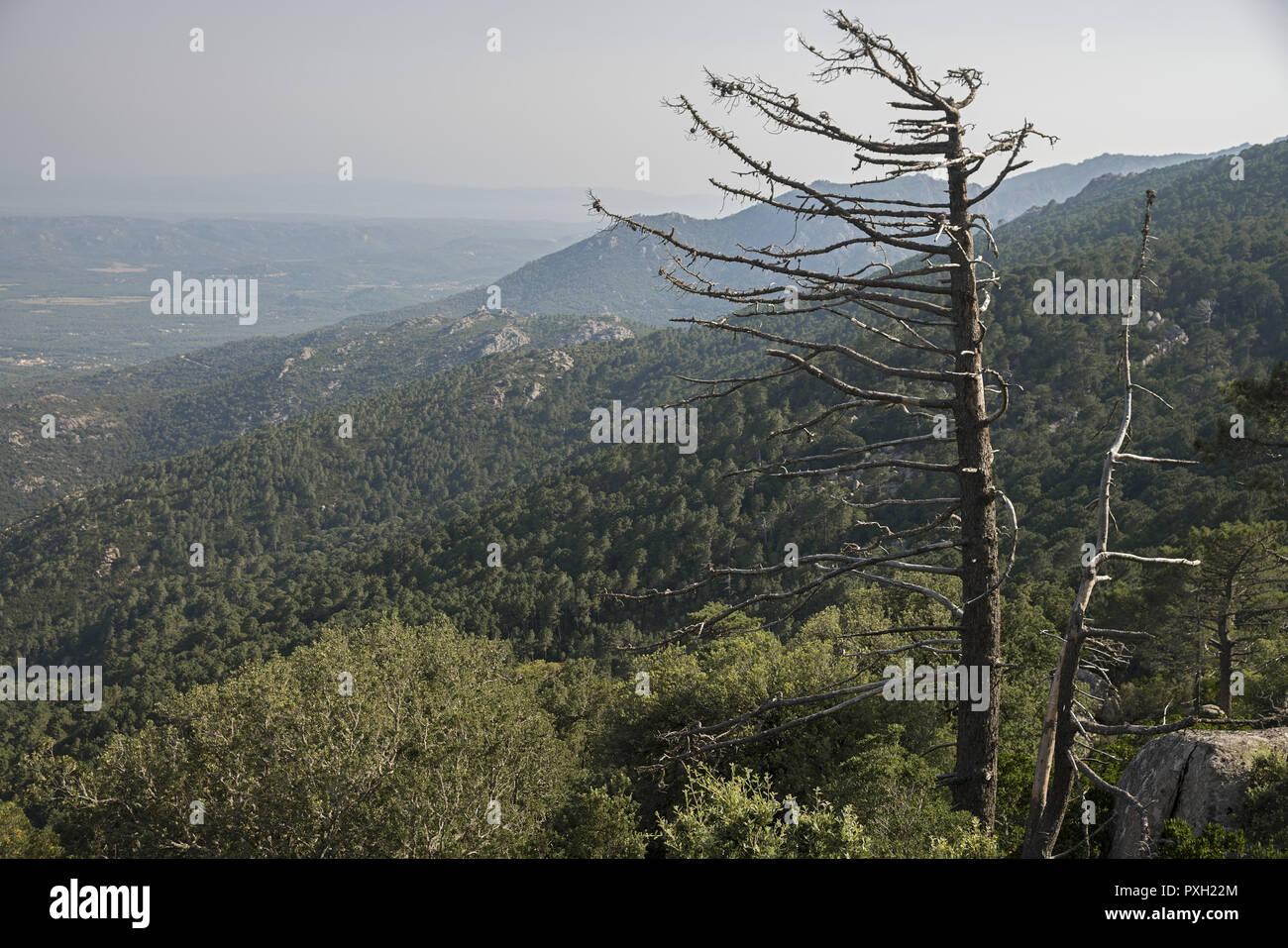 A dry tree against the backdrop of green hills in Eastern Corsica. Ein trockener Baum vor dem Hintergrund der grünen Hügel in Korsika. Suche drzewo. Stock Photo