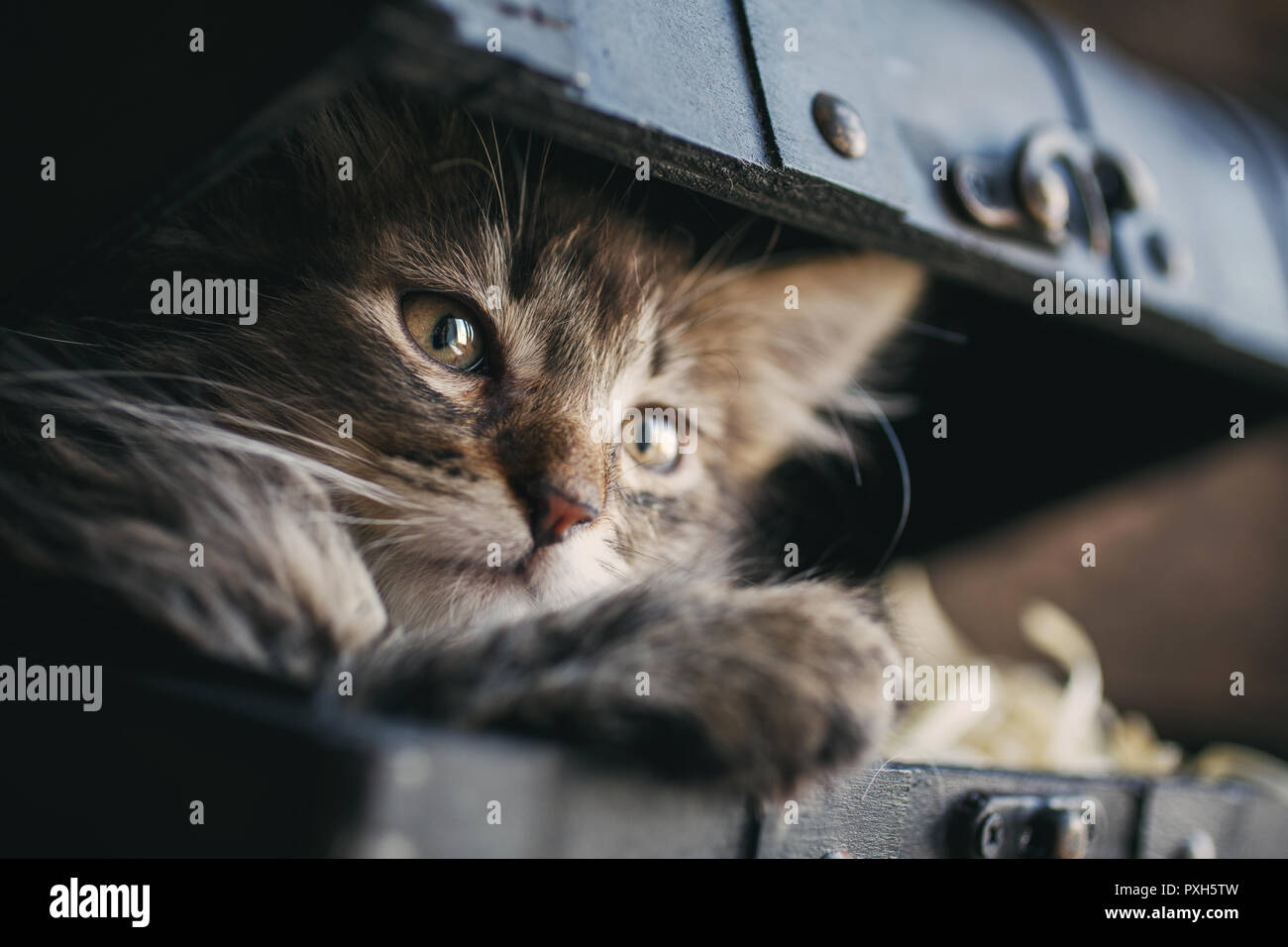 A playful kitten in the vintage box Stock Photo