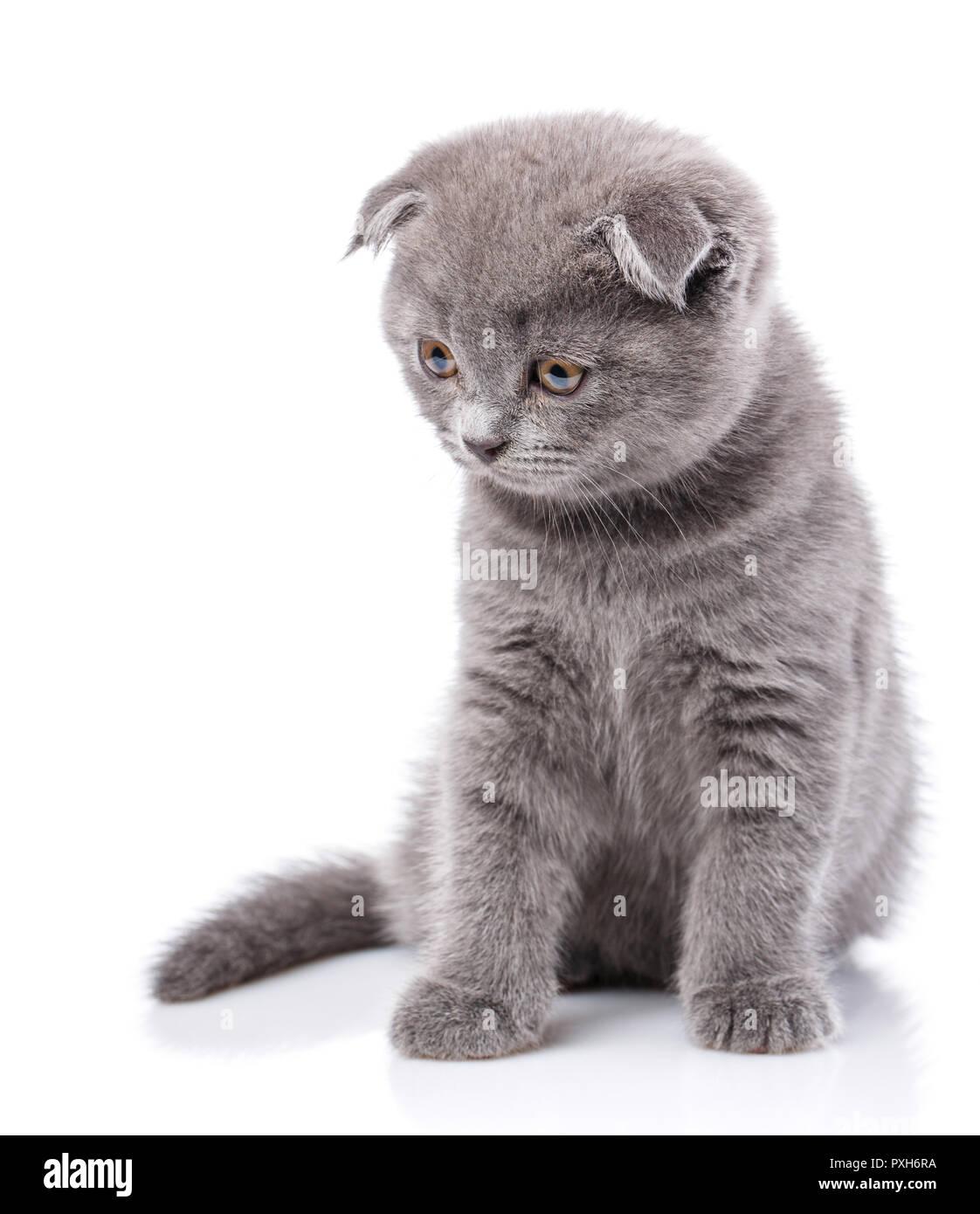 Iso kitten
