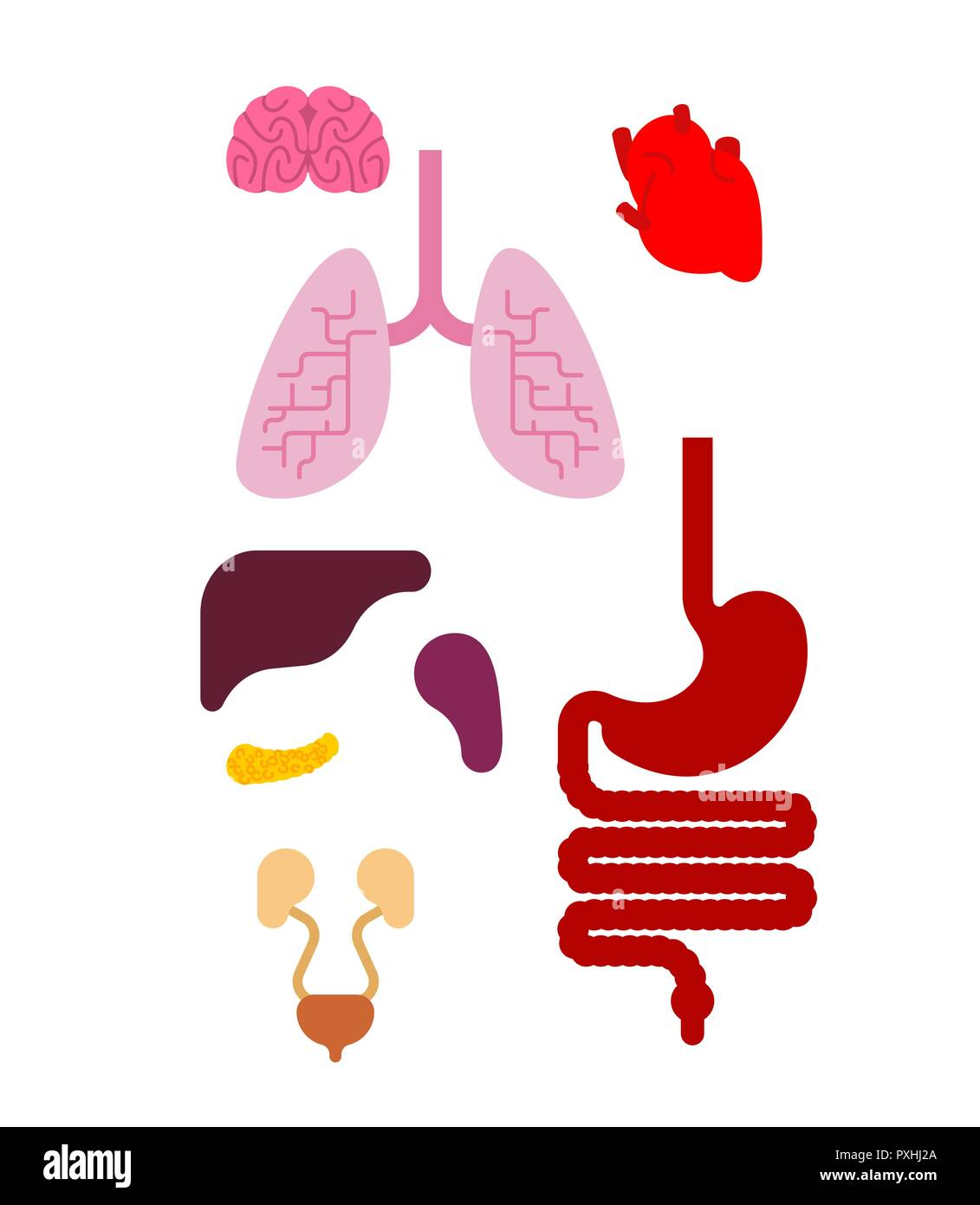 Human Anatomy Organs Internal Set Heart And Brain Liver And