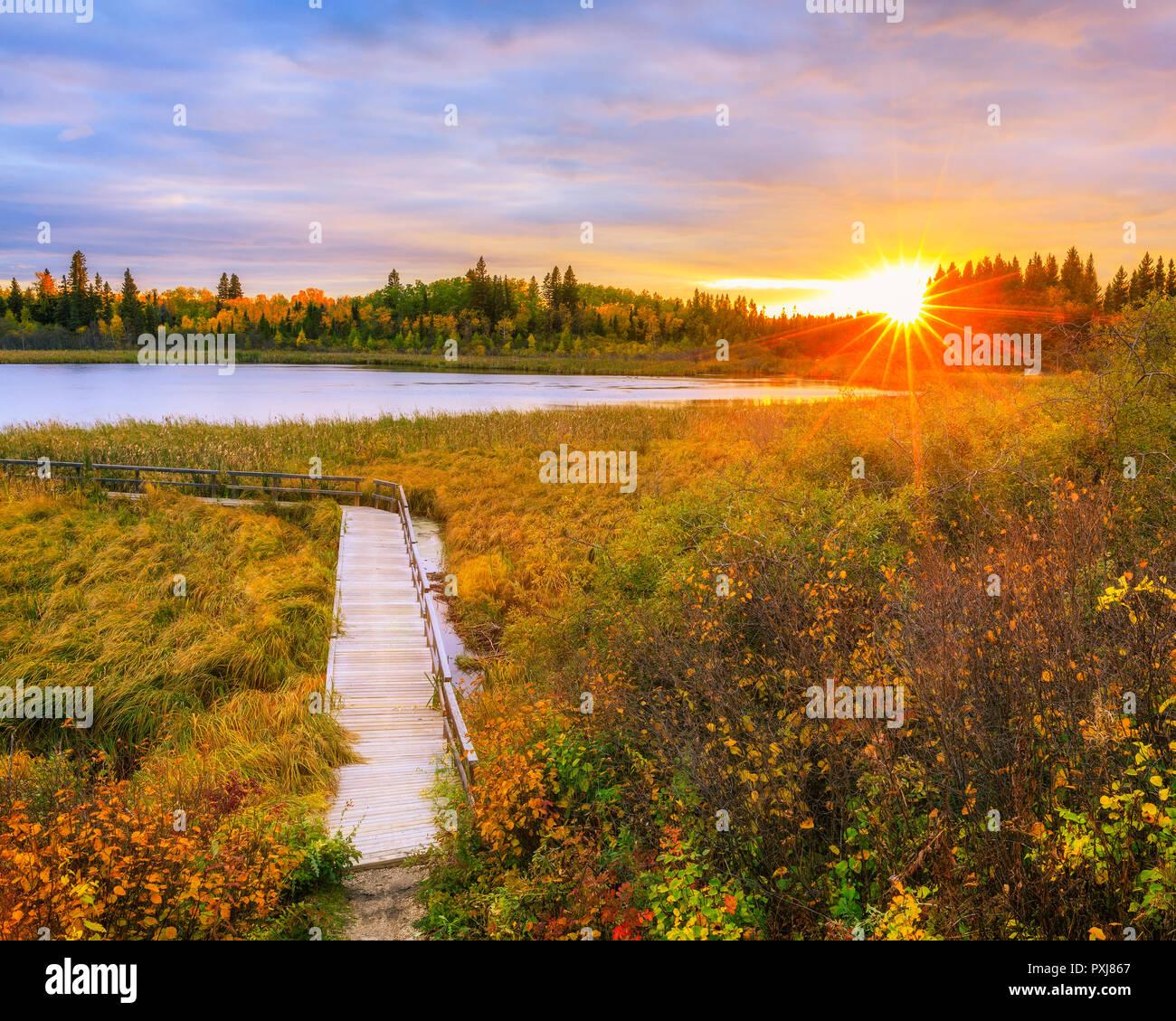 Autumn sunset over Ominik Marsh Boardwalk Trail, Riding Mountain National Park, Manitoba, Canada. Stock Photo