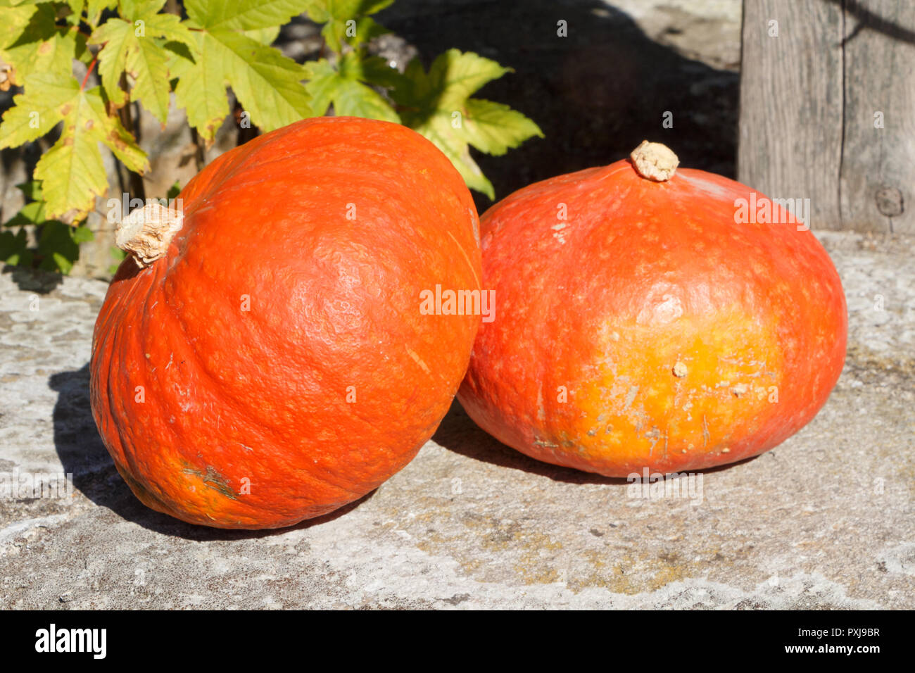 Pumpkins on the coping of a well after harvesting during autumn - Stock Image