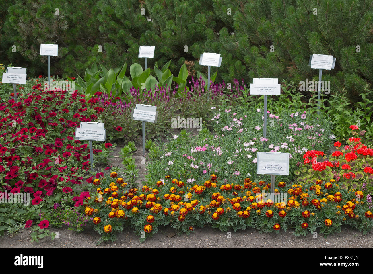 AAS (All-America Selections) flower award winners in display garden at Agriculture building on University of Saskatchewan campus - Stock Image