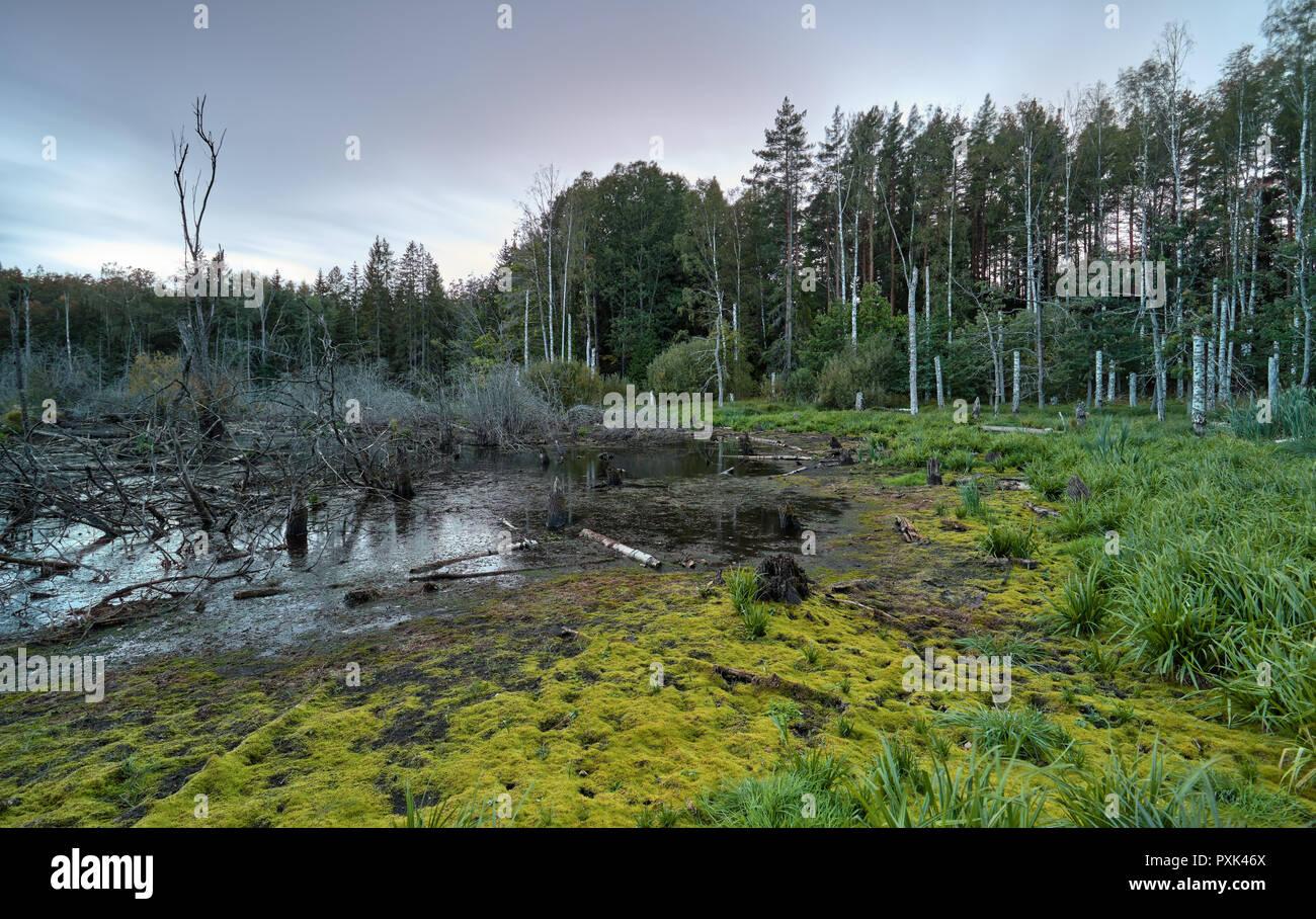 Depressive swamp in a grey evening close to Bogesund, near Stockholm, Sweden - Stock Image