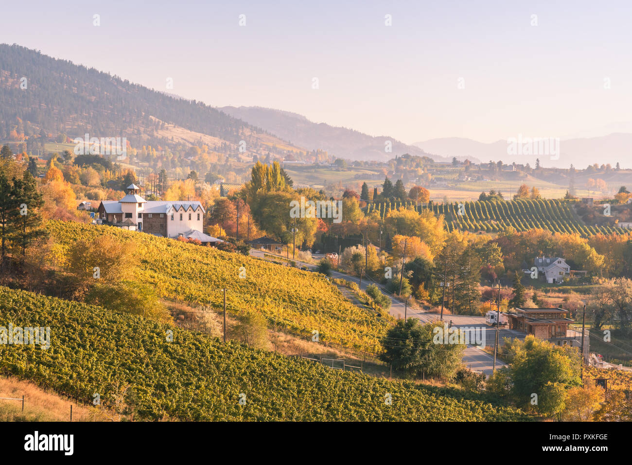View of vineyards and wineries on the Naramata Bench at sunset in autumn Stock Photo