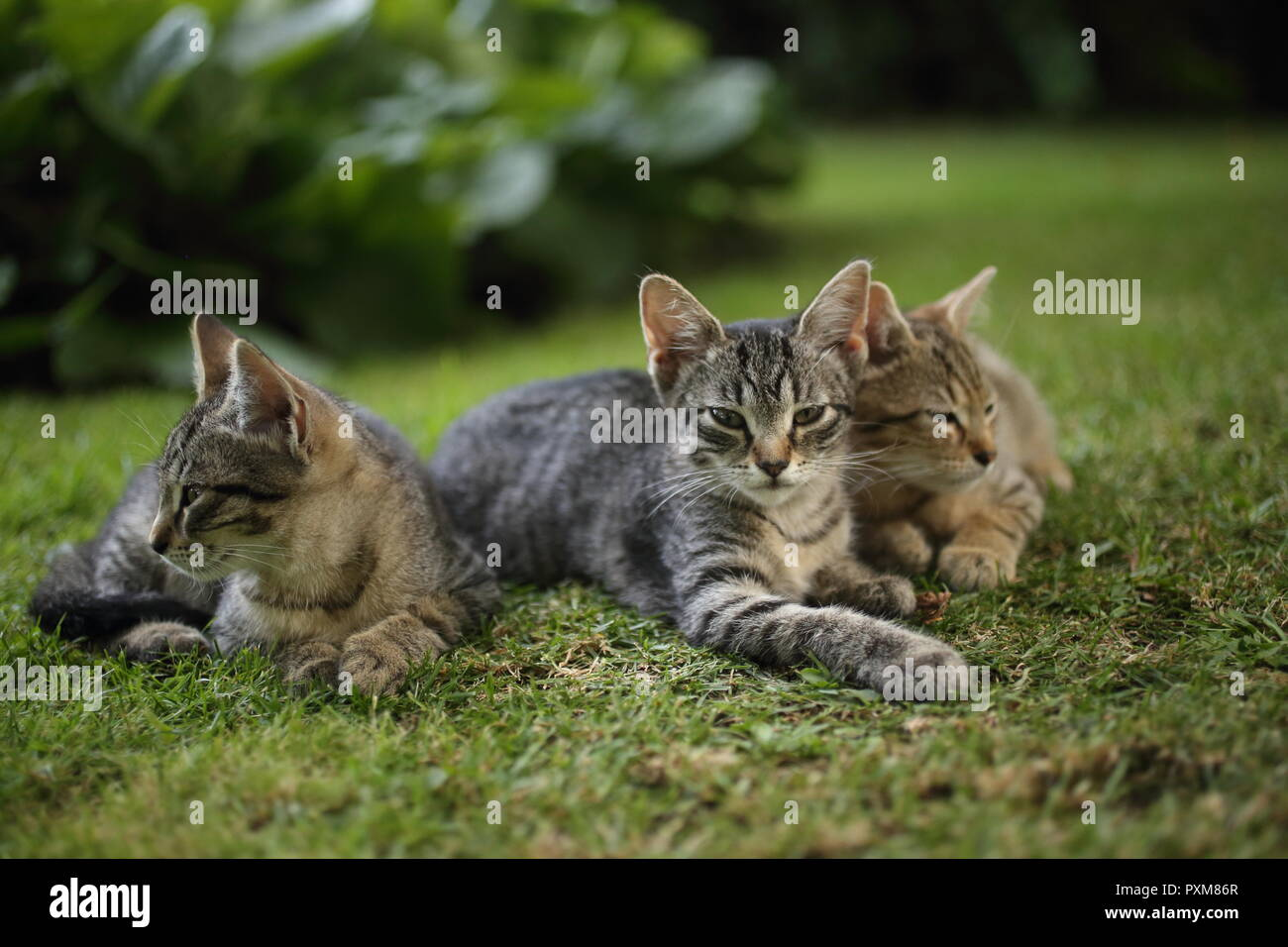 Group of little playing kittens in the grass - Stock Image