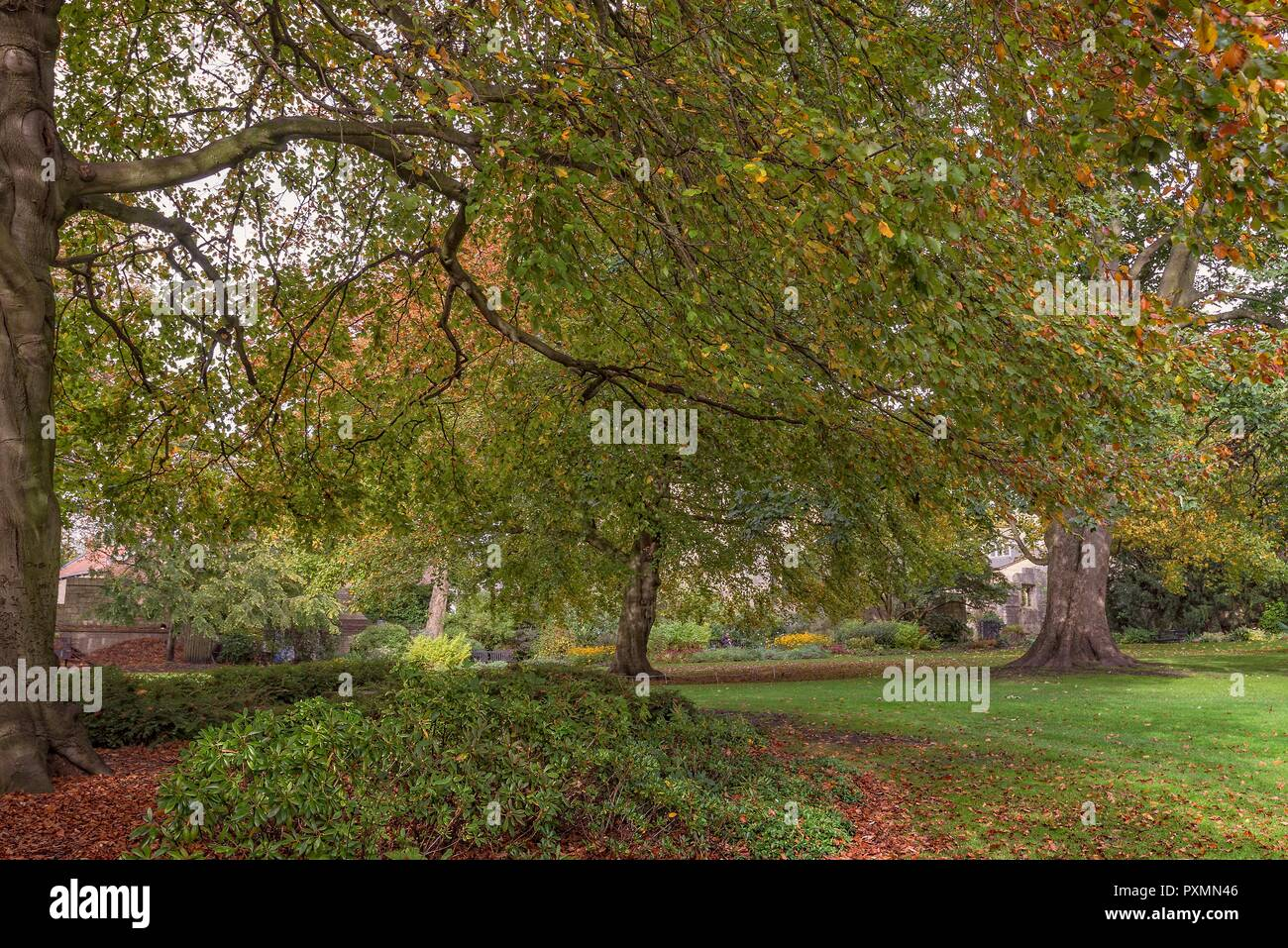 Early autumn in Museum Gardens in York. Leaves litter the ground and sunlight dapples the lawn between the autumnal trees. Stock Photo
