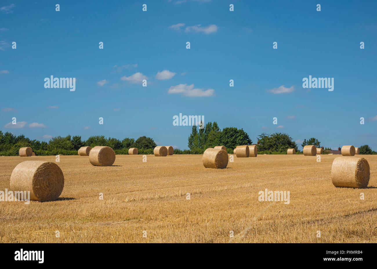 Rounded bails of hay in a harvested farmers field in the Derbyshire countryside. England UK - Stock Image