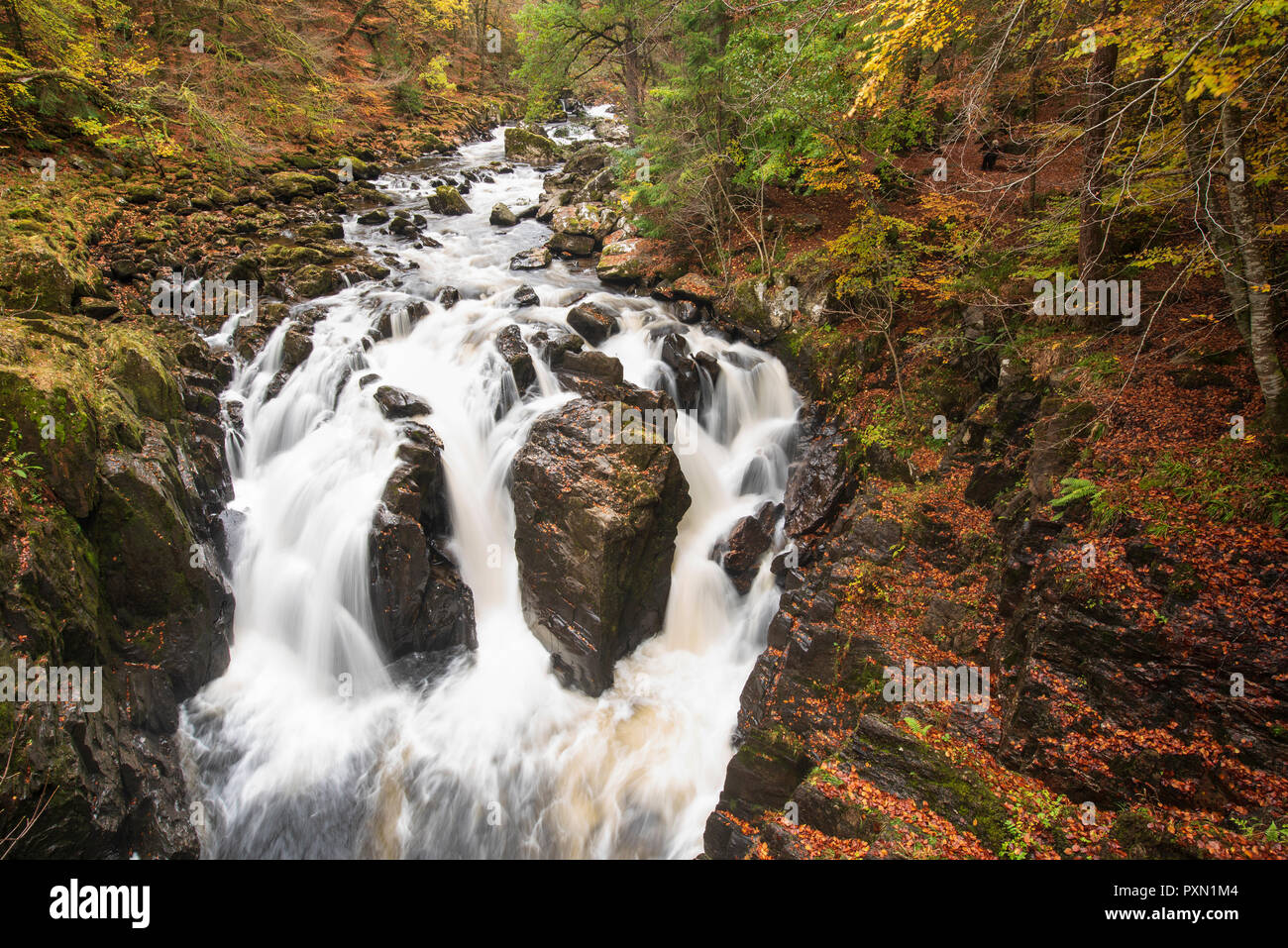 The Black Linn Falls at the Hermitage near Dunkeld, Perthshire, Scotland. - Stock Image