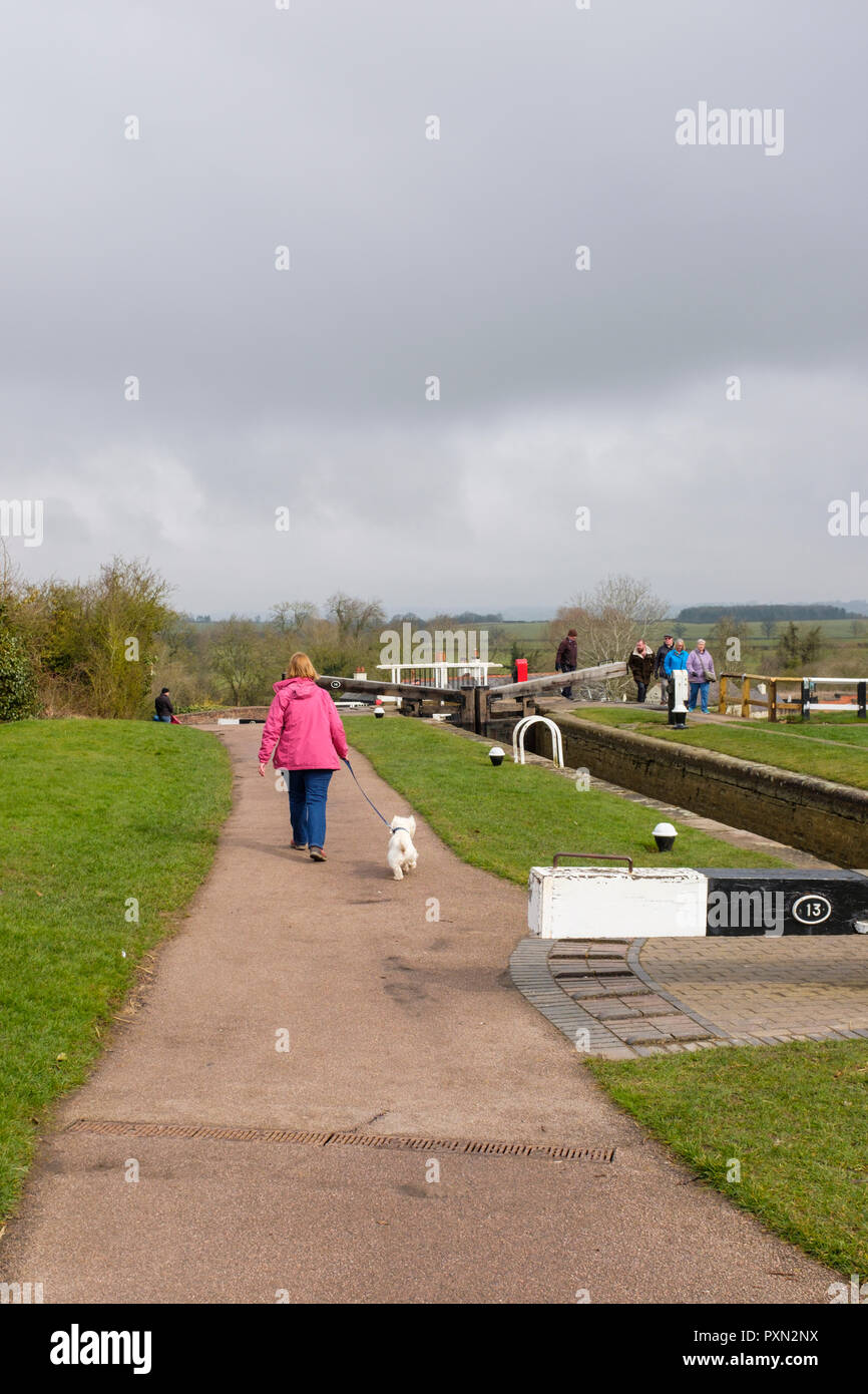 Lady dressed in a red coat walking along a canal towpath with a West Highland Terrior. Foxton locks, Market Harborugh, Leicestershire. England. UK - Stock Image