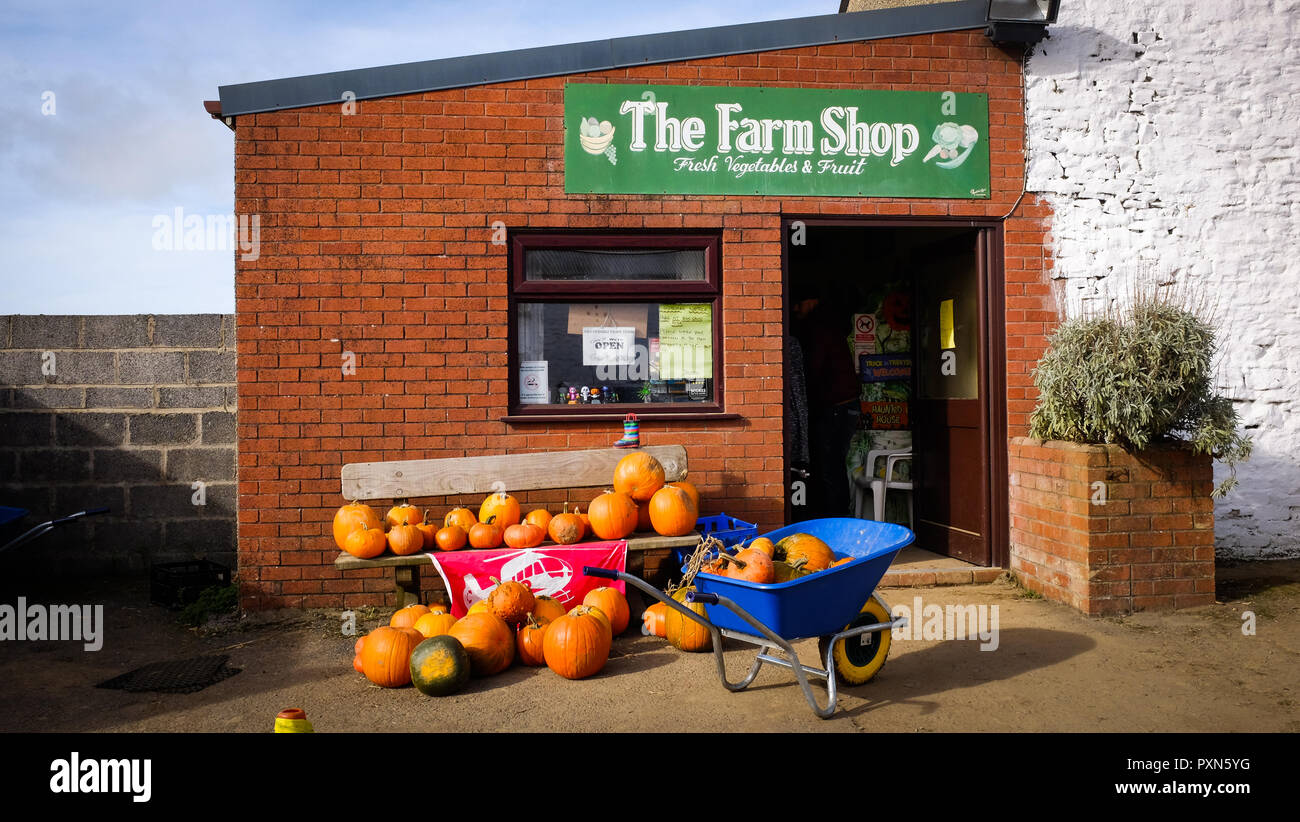 23rd October 2018 A view of pumpkins outside a fram shop ready to be bought. - Stock Image