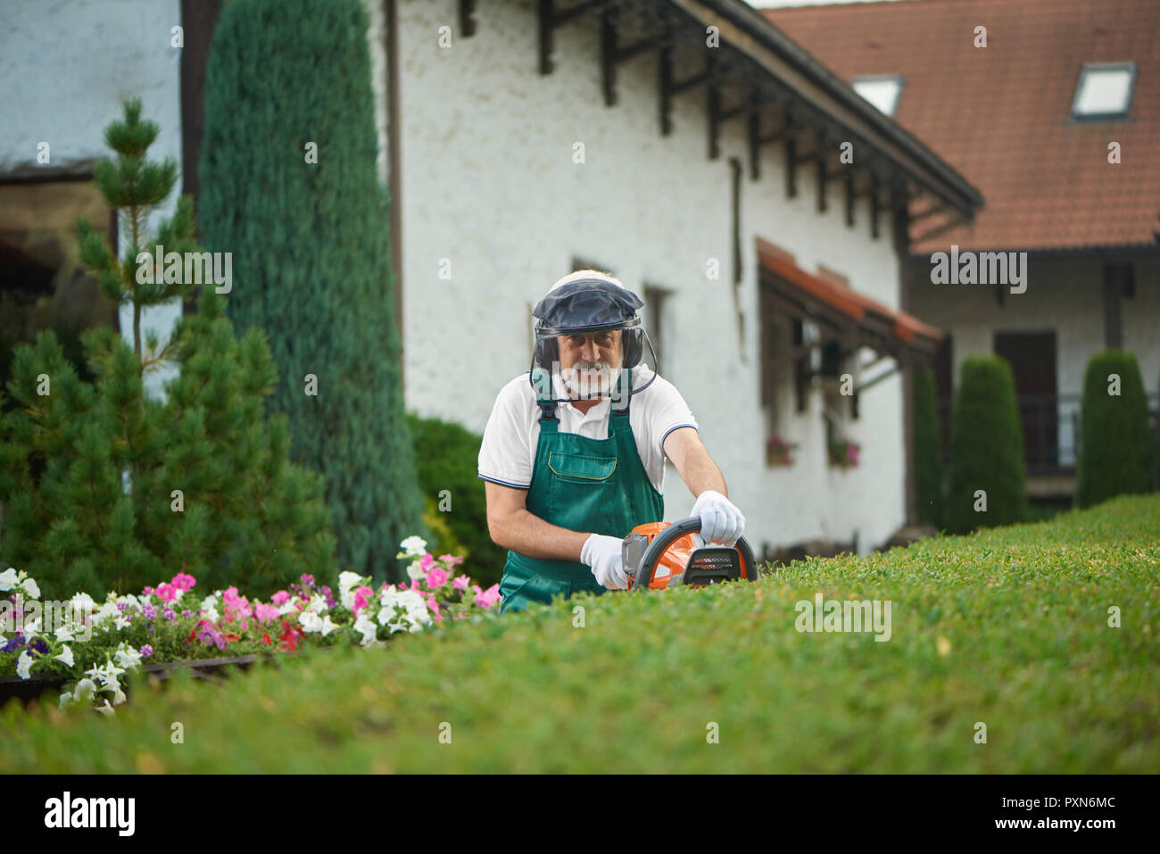 Professional older gardener in uniform cutting bushes with clippers and looking at camera. Worker, wearing in uniform with safety mask and protective headphones landscaping bushes in backyard. - Stock Image