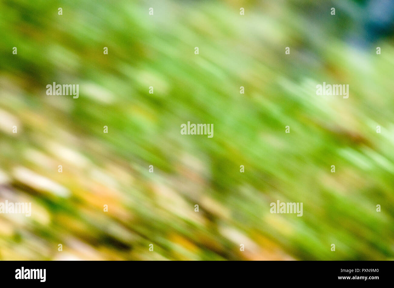 Pattern created by motion blur in Norwegian autumn forest. - Stock Image
