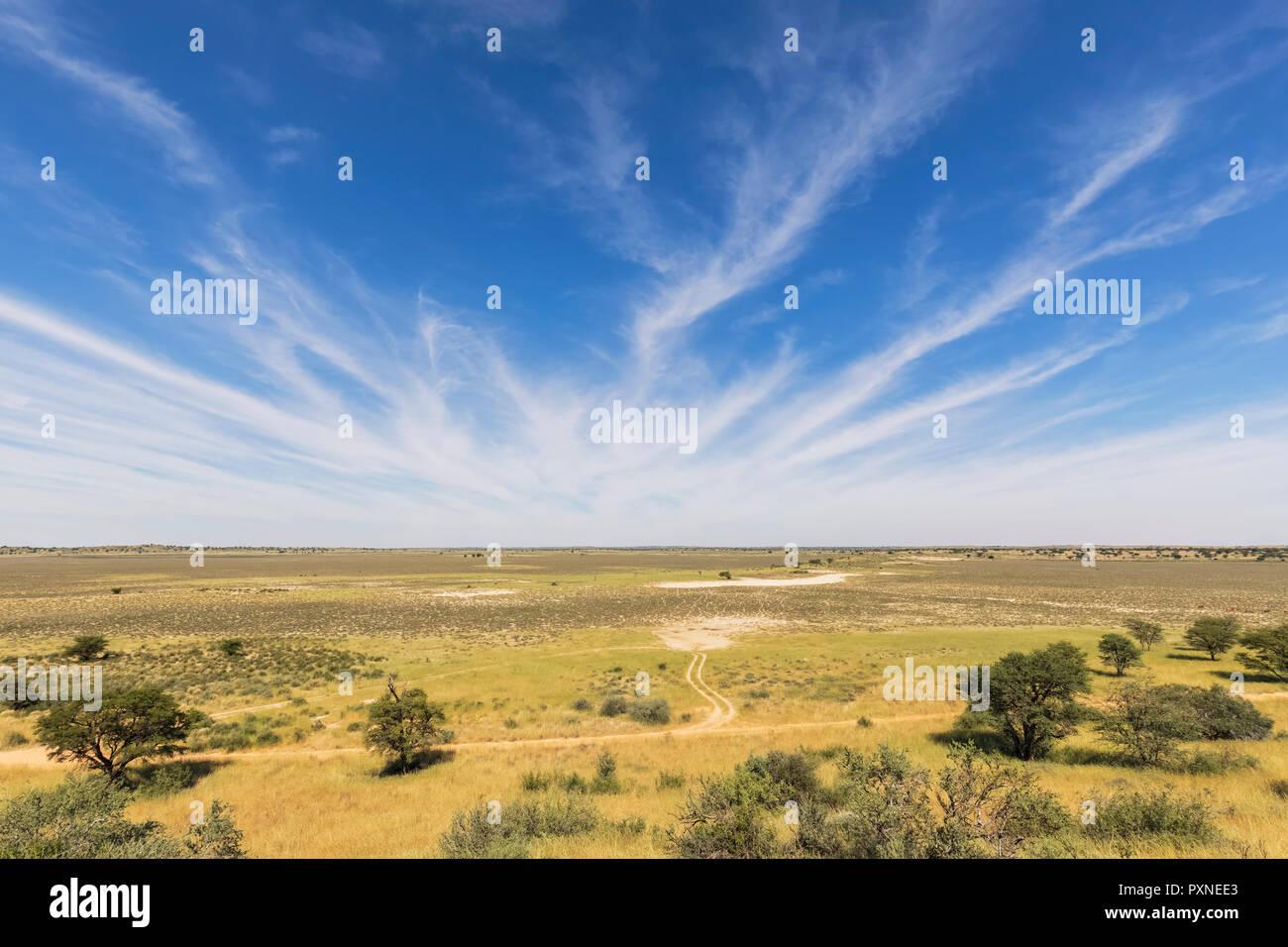 Africa, Botswana, Kgalagadi Transfrontier Park, Kalahari, Polentswa Pan and waterhole - Stock Image