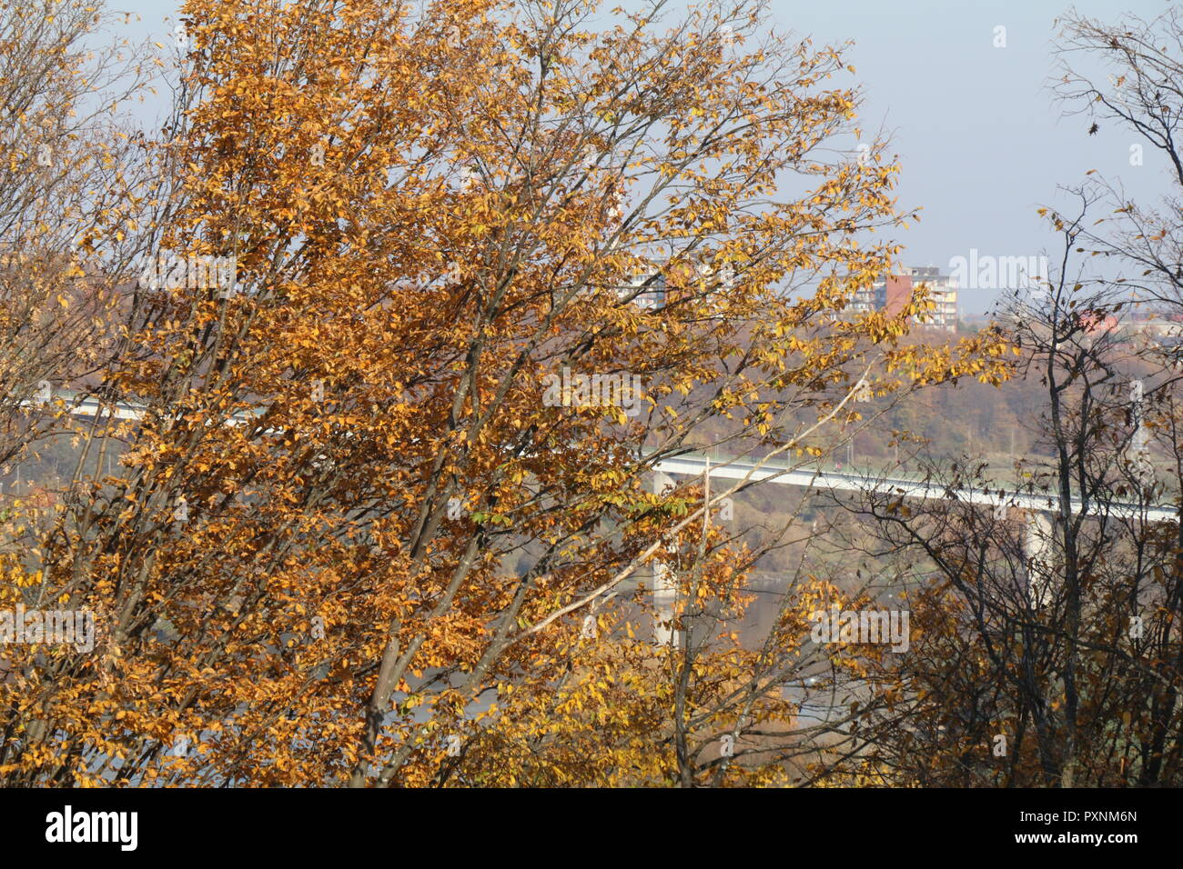 Sunny day in Kaunas Lithuania - Stock Image