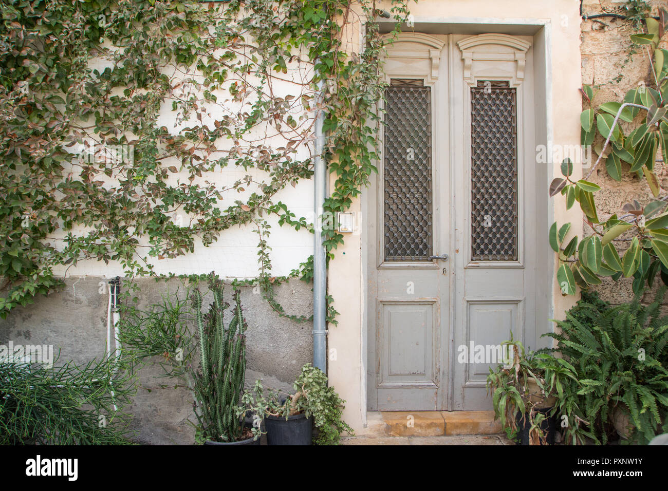 Old light grey door with an overgrown wall, mediterranean atmosphere, old town in Jaffa, israel. - Stock Image