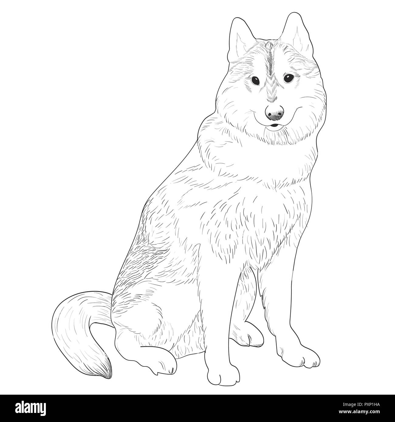 Husky hand drawn sketch. Purebred dog sitting isolated on white background. - Stock Vector