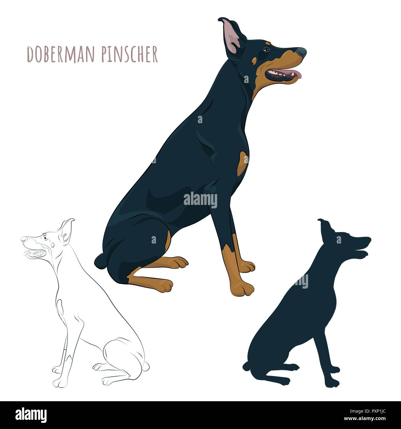 Doberman Pinscher sitting isolated on white background. Silhouette of sitting dog.Dobermann sitting and panting with tongue out. Watchdog for your des - Stock Image