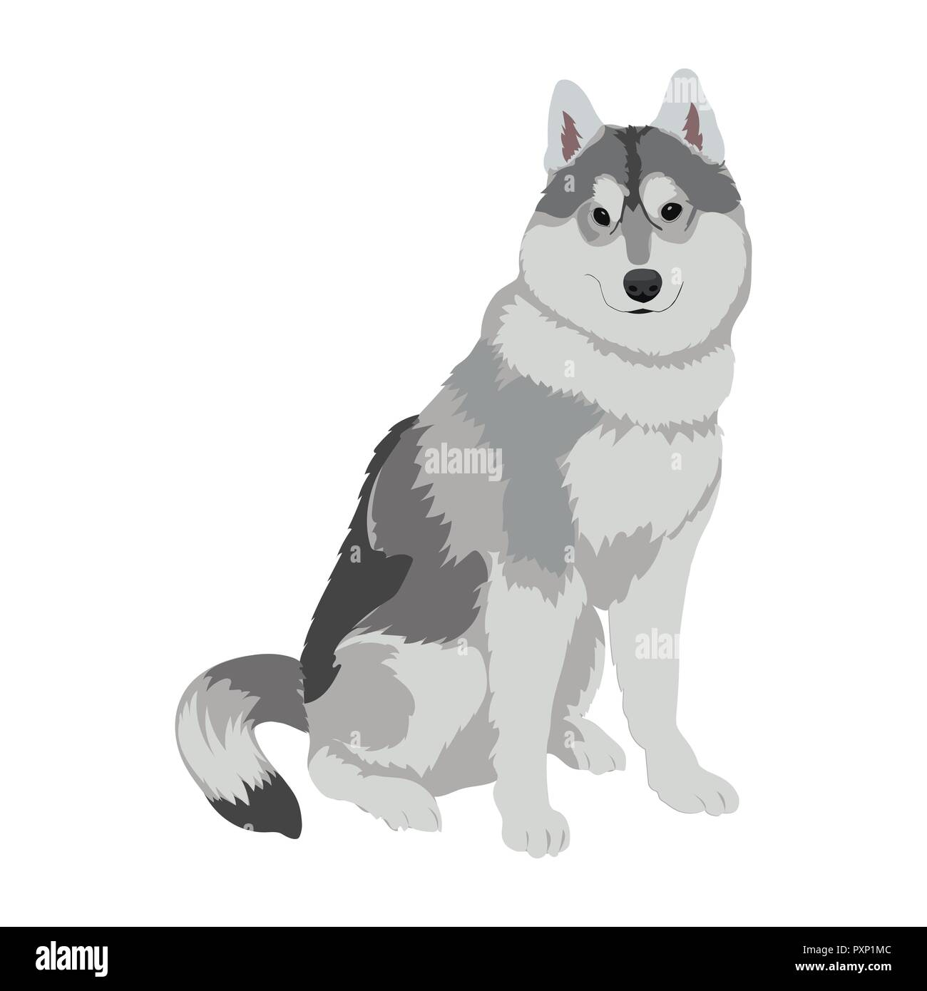 Husky dog sitting isolated on white background. Sled dog illustration. Cute Alaskan Malamute dog for your design. - Stock Vector