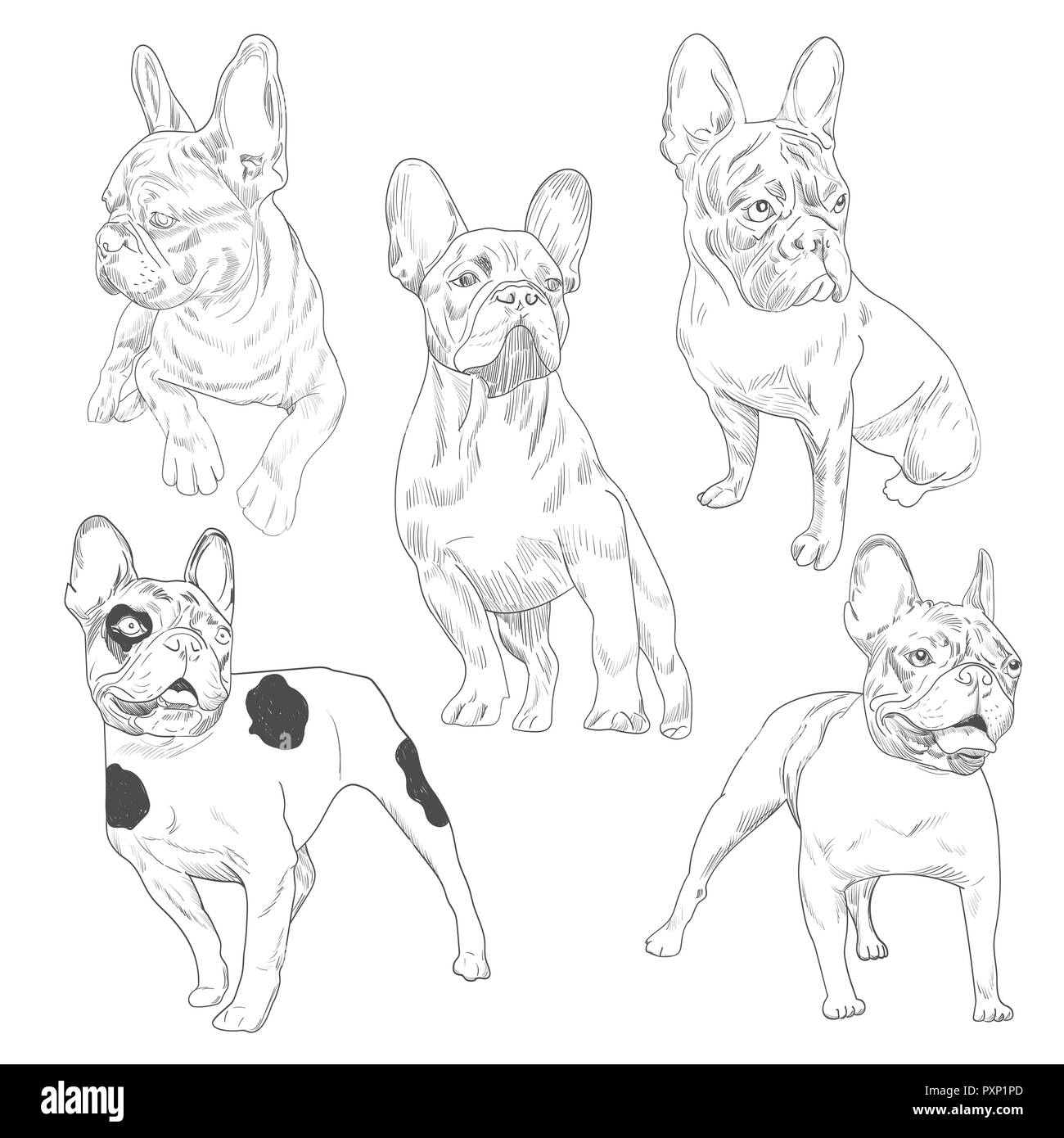 Purebred dog in different poses hand drawn sketches. French bulldog set isolated on white background. - Stock Image