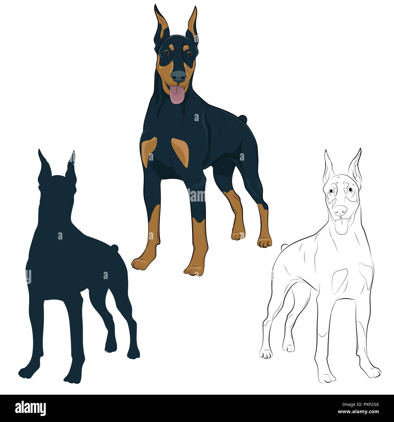 Dobermann standing and panting with tongue out. Watchdog for your design.Doberman Pinscher standing isolated on white background. Silhouette, sketch a - Stock Vector