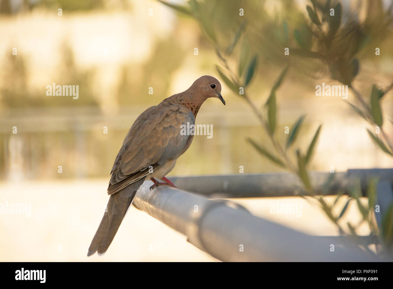 Taupe Dans Le Jardin taupe animal stock photos & taupe animal stock images - alamy