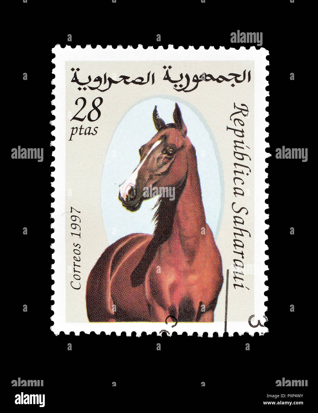 Cancelled postage stamp printed by Sahrawi, that shows horse, circa 1998. - Stock Image
