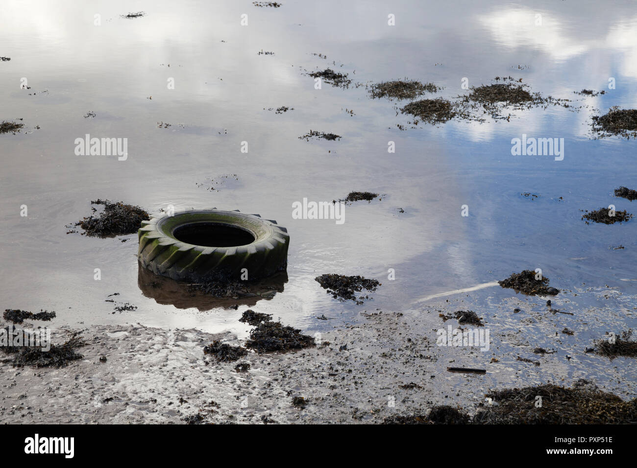Tractor tyre washed up on the shore. Pollution in the sea.bay Stock Photo