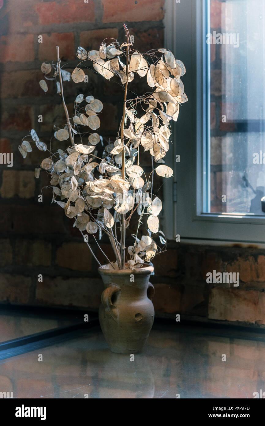 Silberblatt in der Vase am Fenster - Stock Image