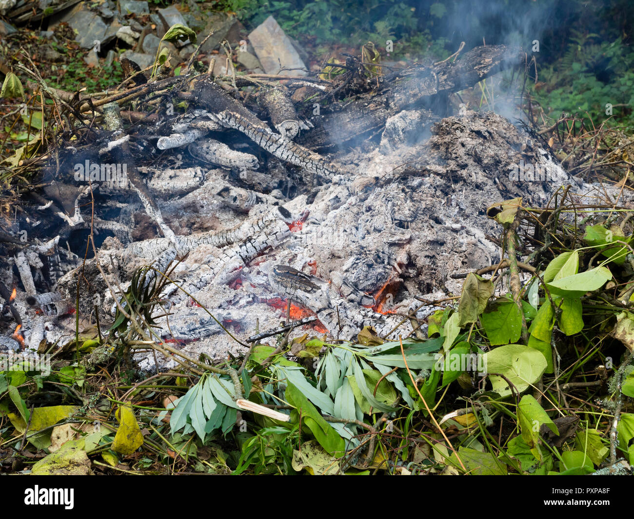 Burning garden waste on an autumn bonfire to produce wood ash and help disease control - Stock Image